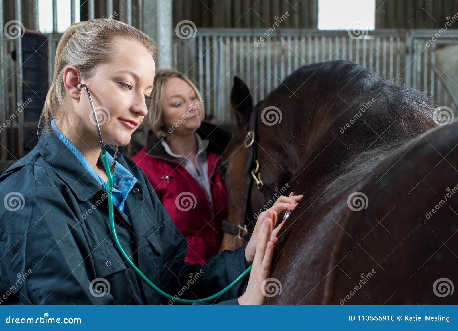 Vétérinaire féminin donnant l examen médical au cheval dans l écurie