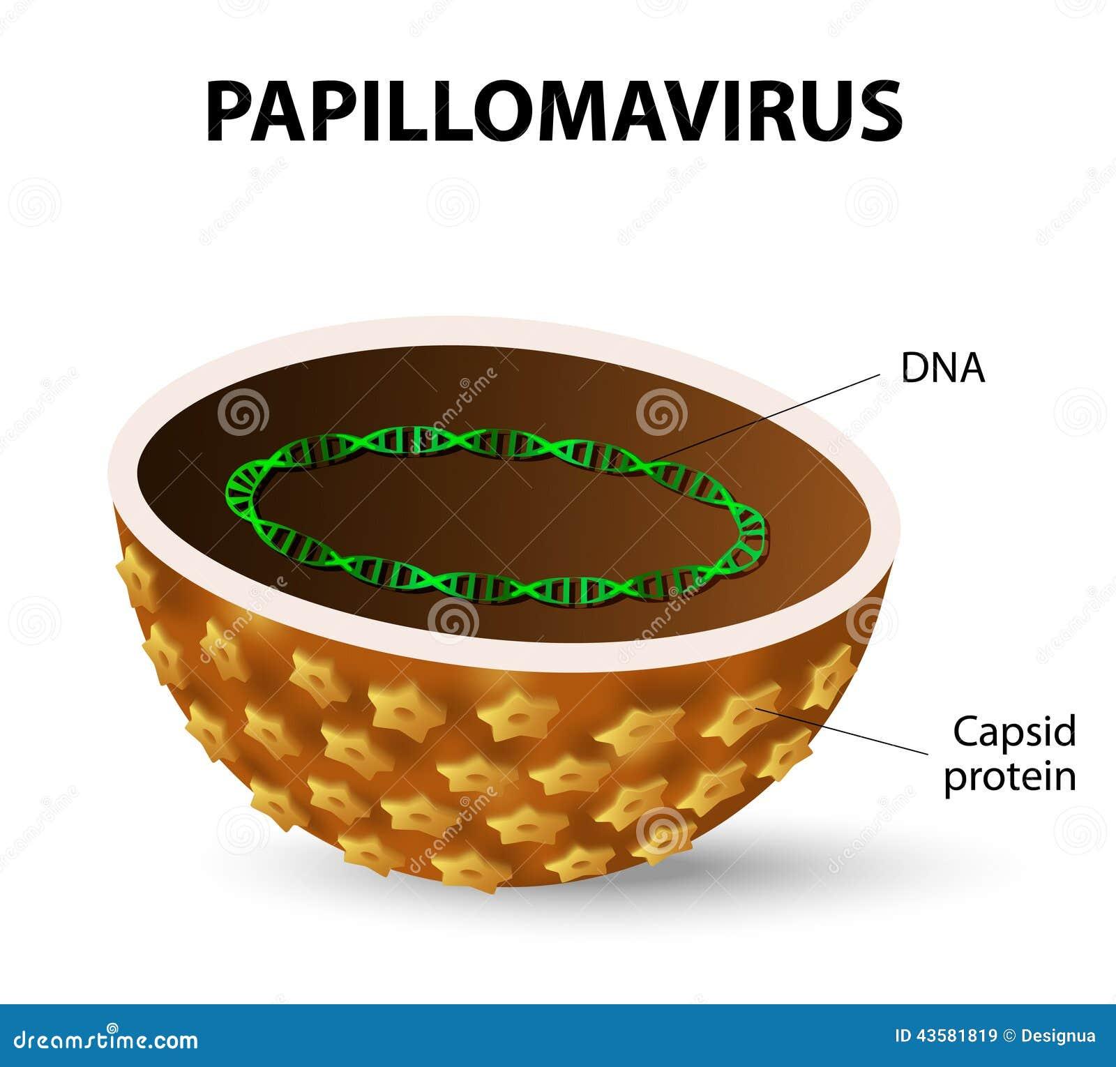 Vírus de papiloma humano HPV