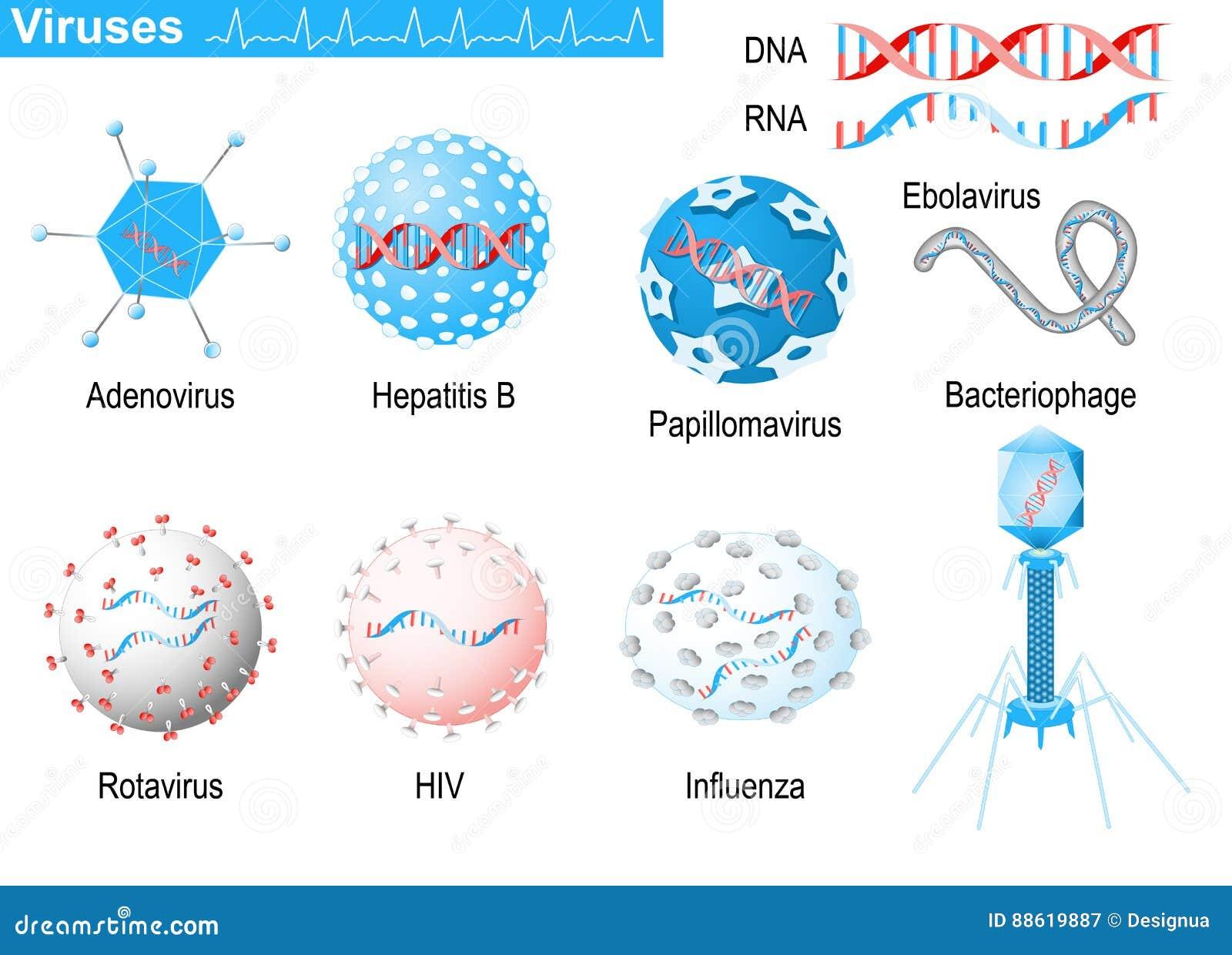 Vírus RNA e ADN Infographic médico ajustado com ícones do viru