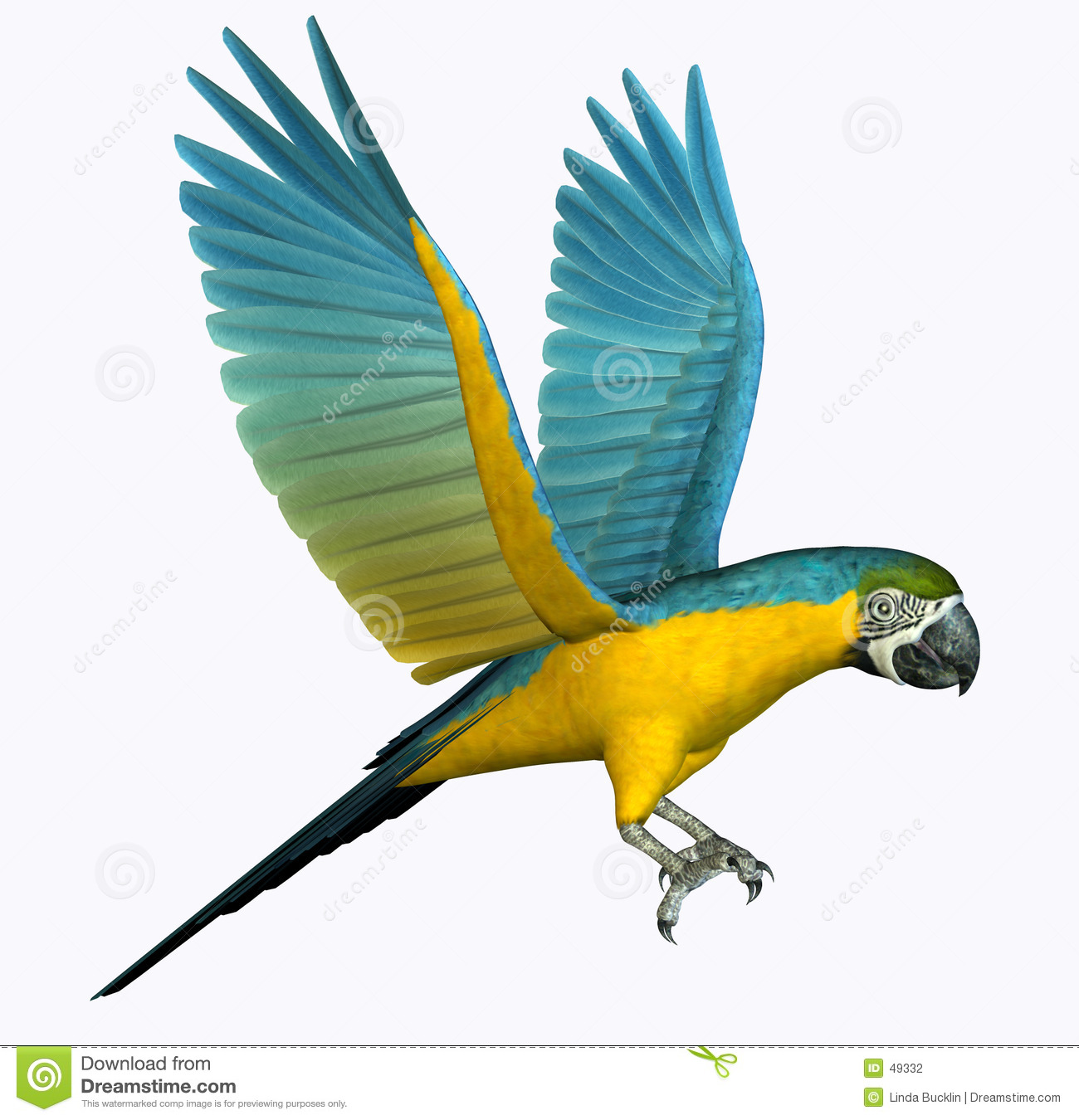 Vôo do Macaw