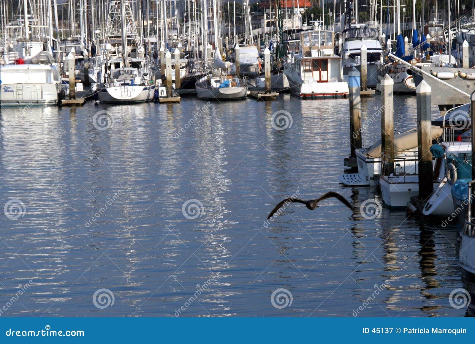 Vôo do porto