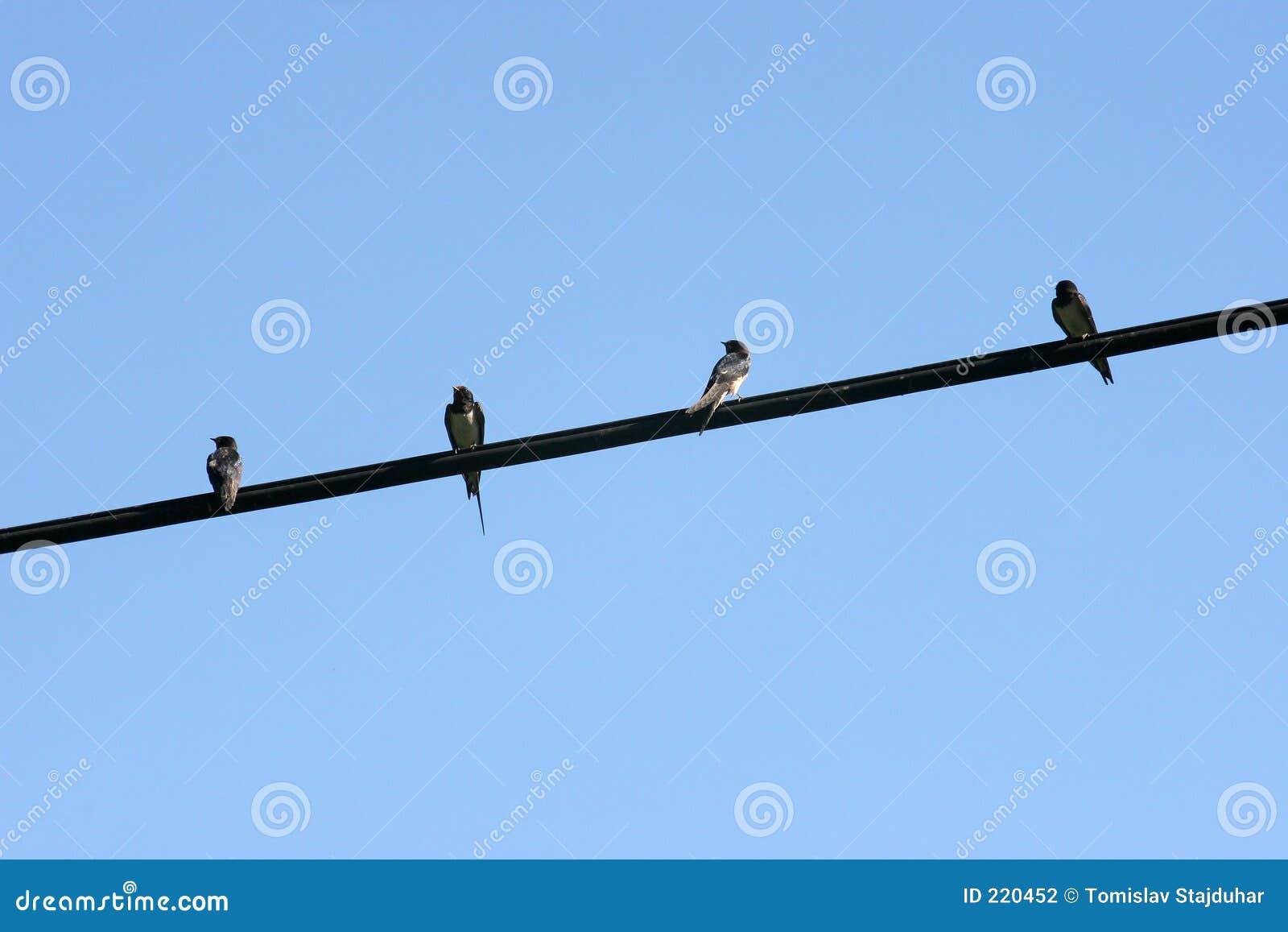 Vögel auf dem Draht