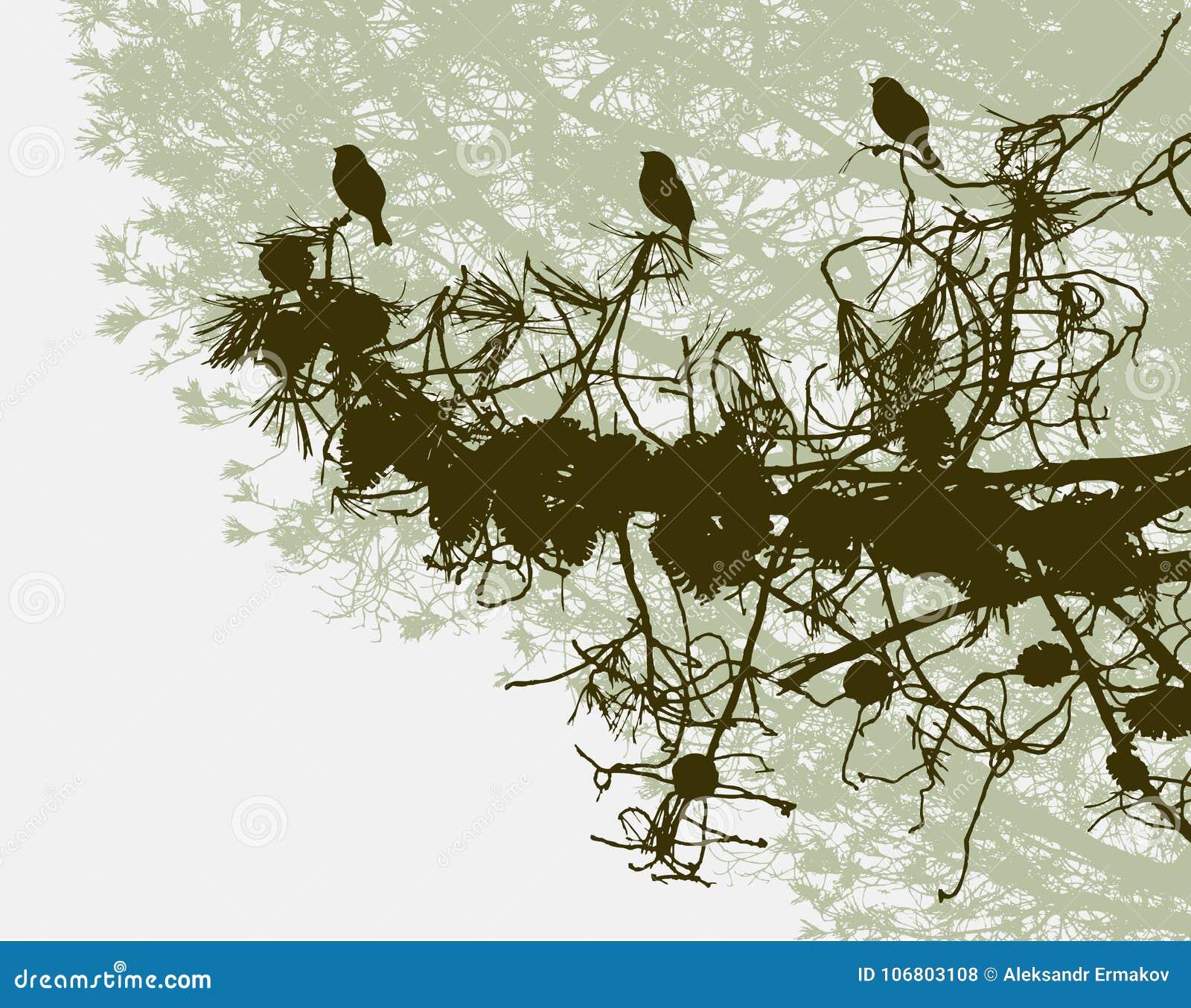 Download Vögel Auf Einer Niederlassung Der Kiefers Vektor Abbildung - Illustration von kiefer, vögel: 106803108
