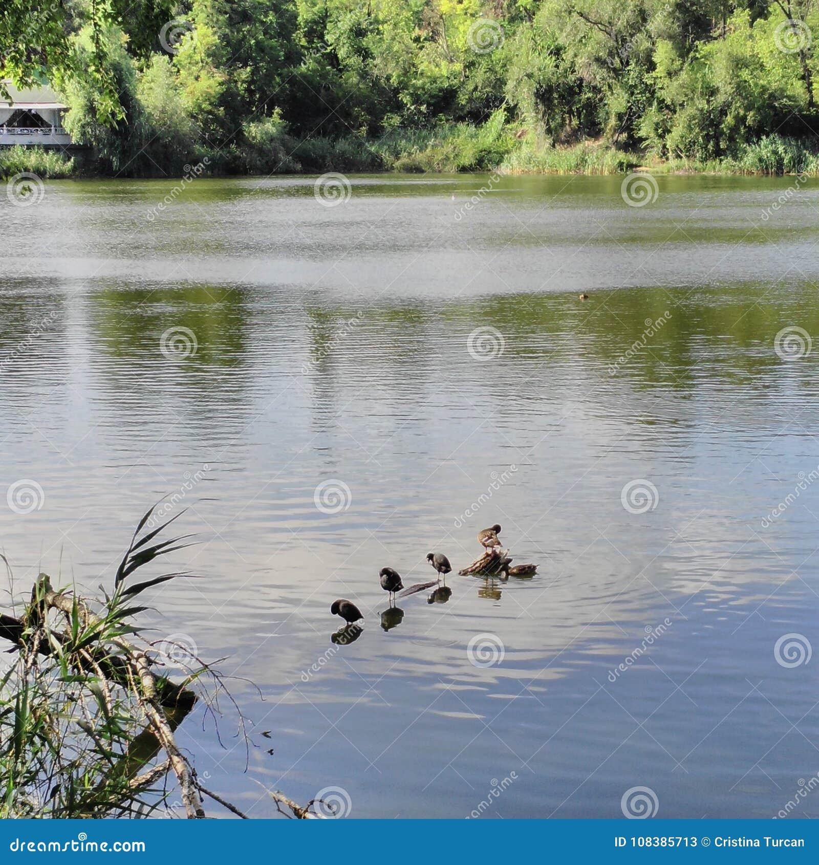 Vögel auf Wasserklotz