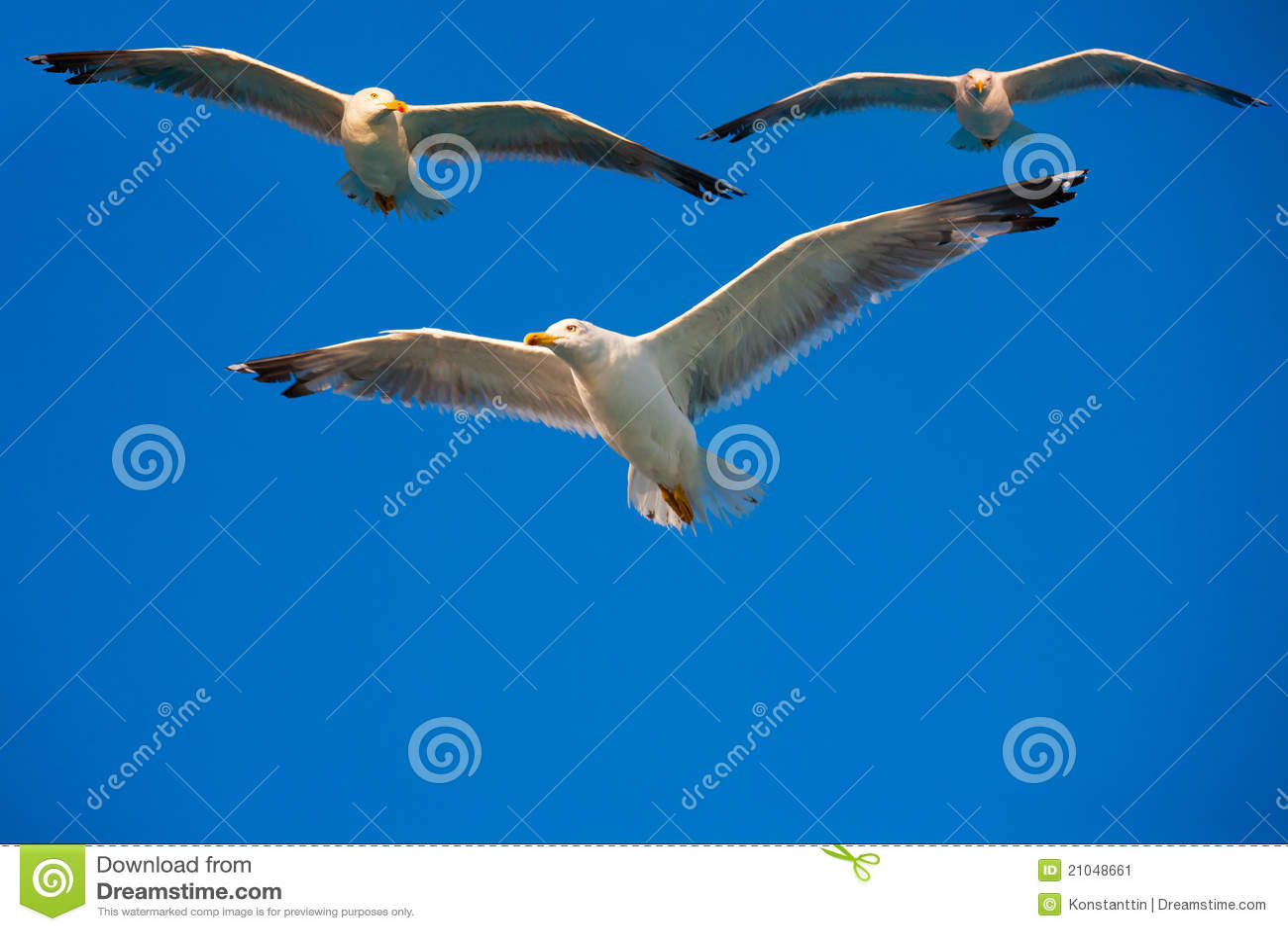 Vögel, die in den Himmel fliegen