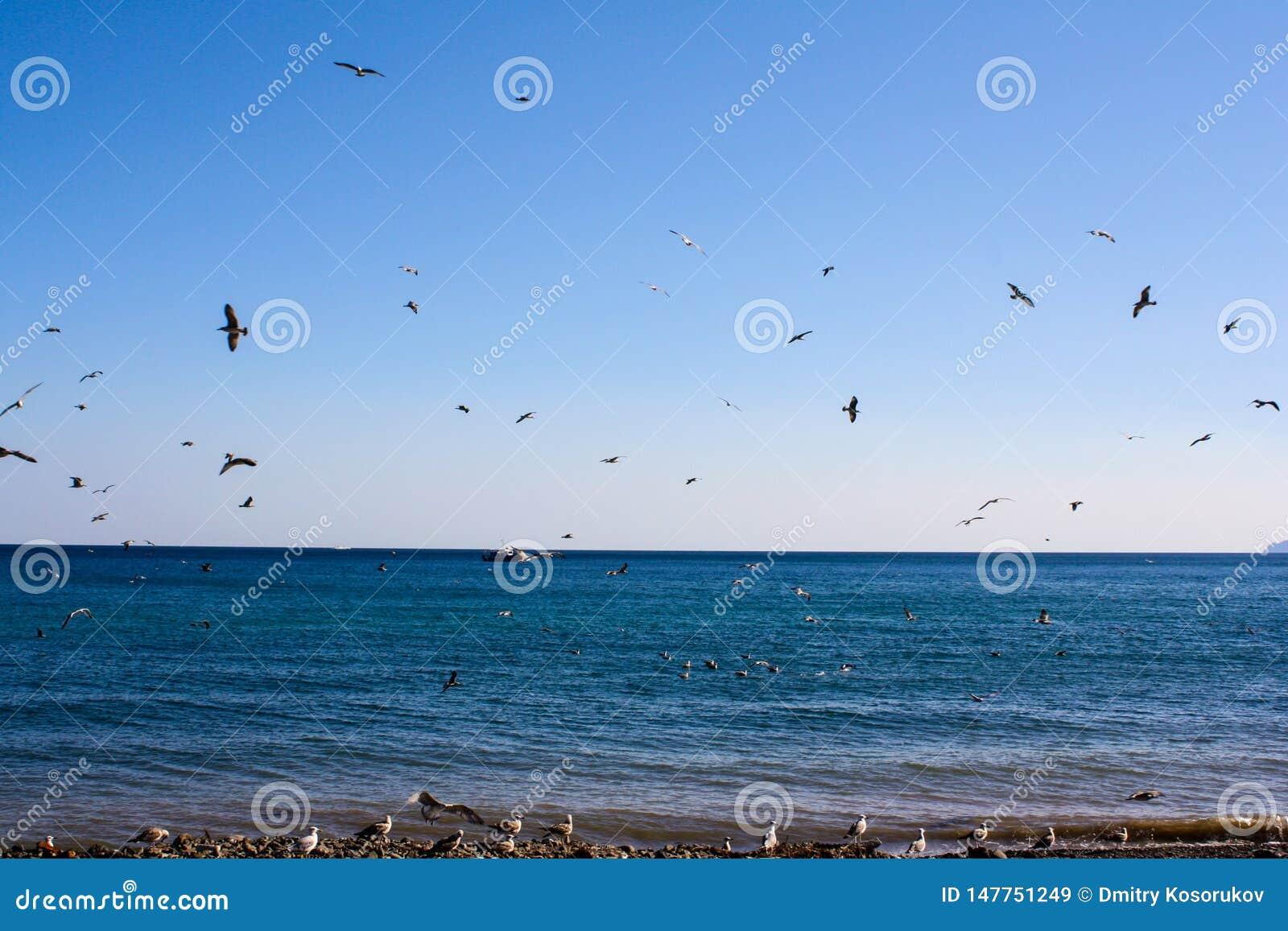 Vögel fliegen durch das Meer