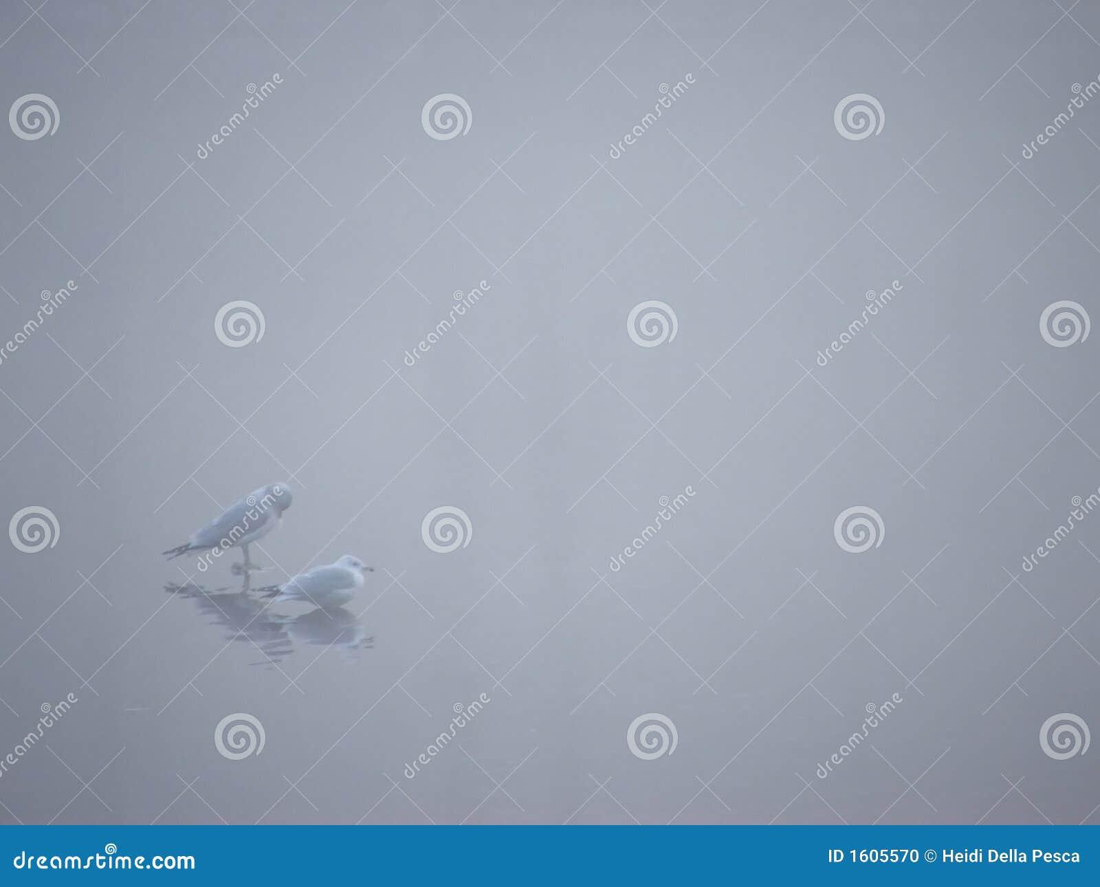 Vögel im Nebel III