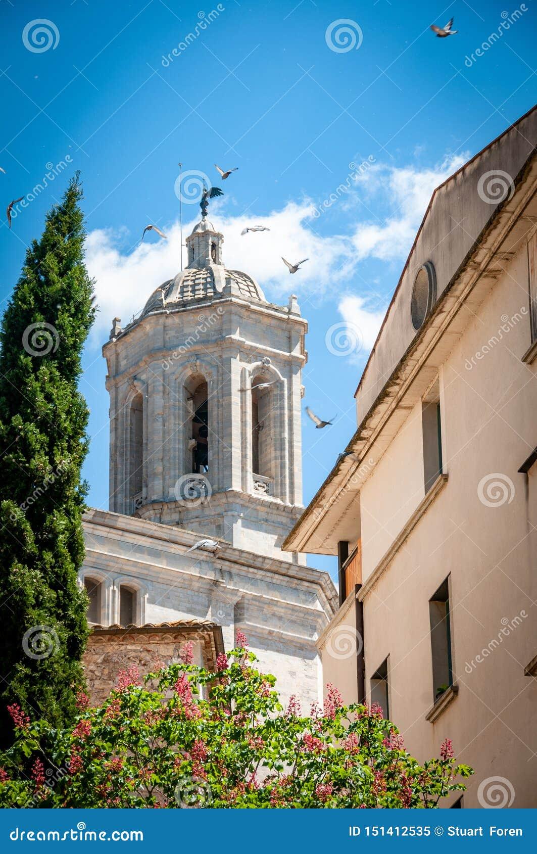 Vögel von Girona heraus für einen Tagesflug