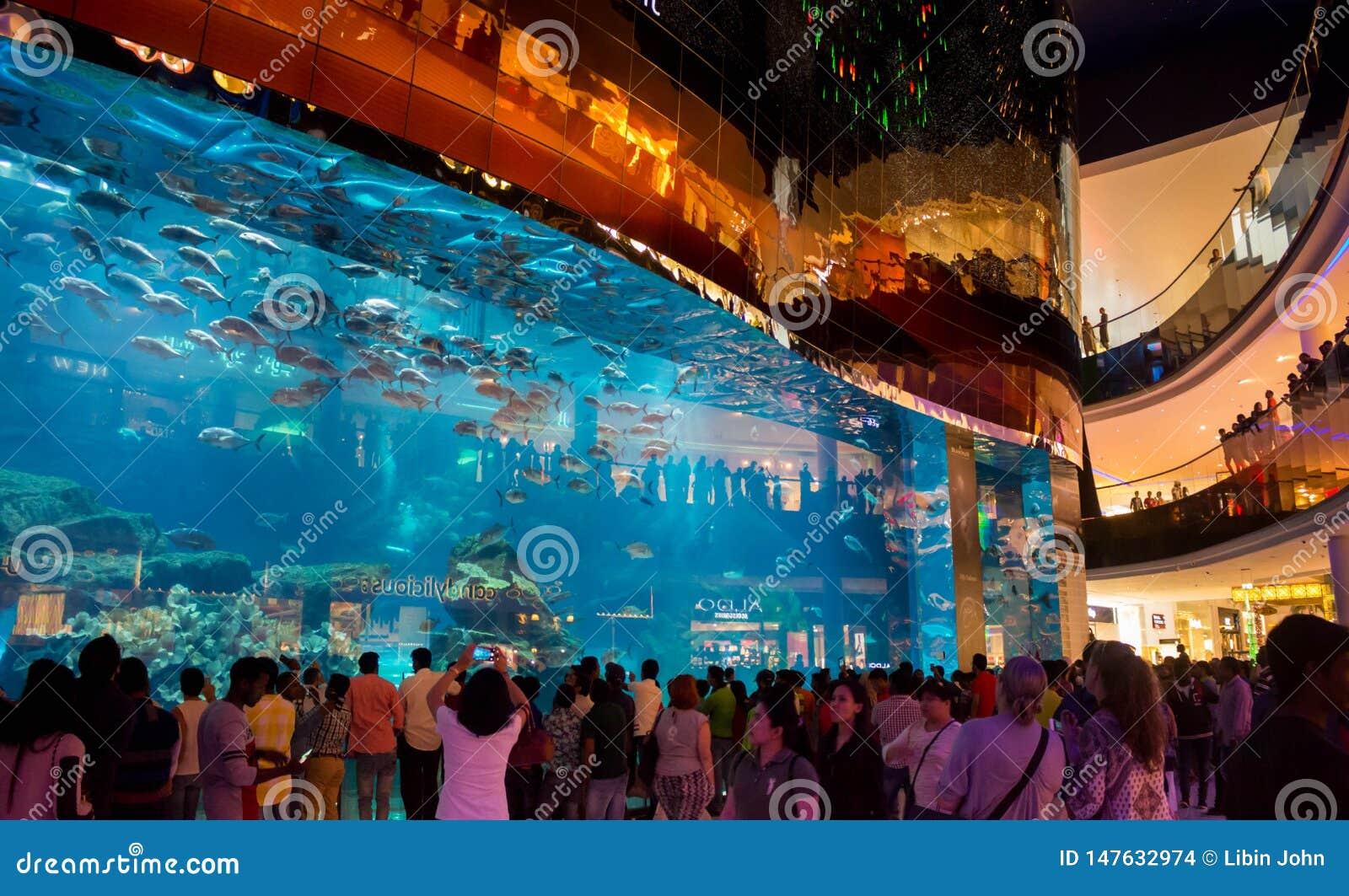 Völker, die größtes Aquarium und Fische an Dubai-Mall aufpassen
