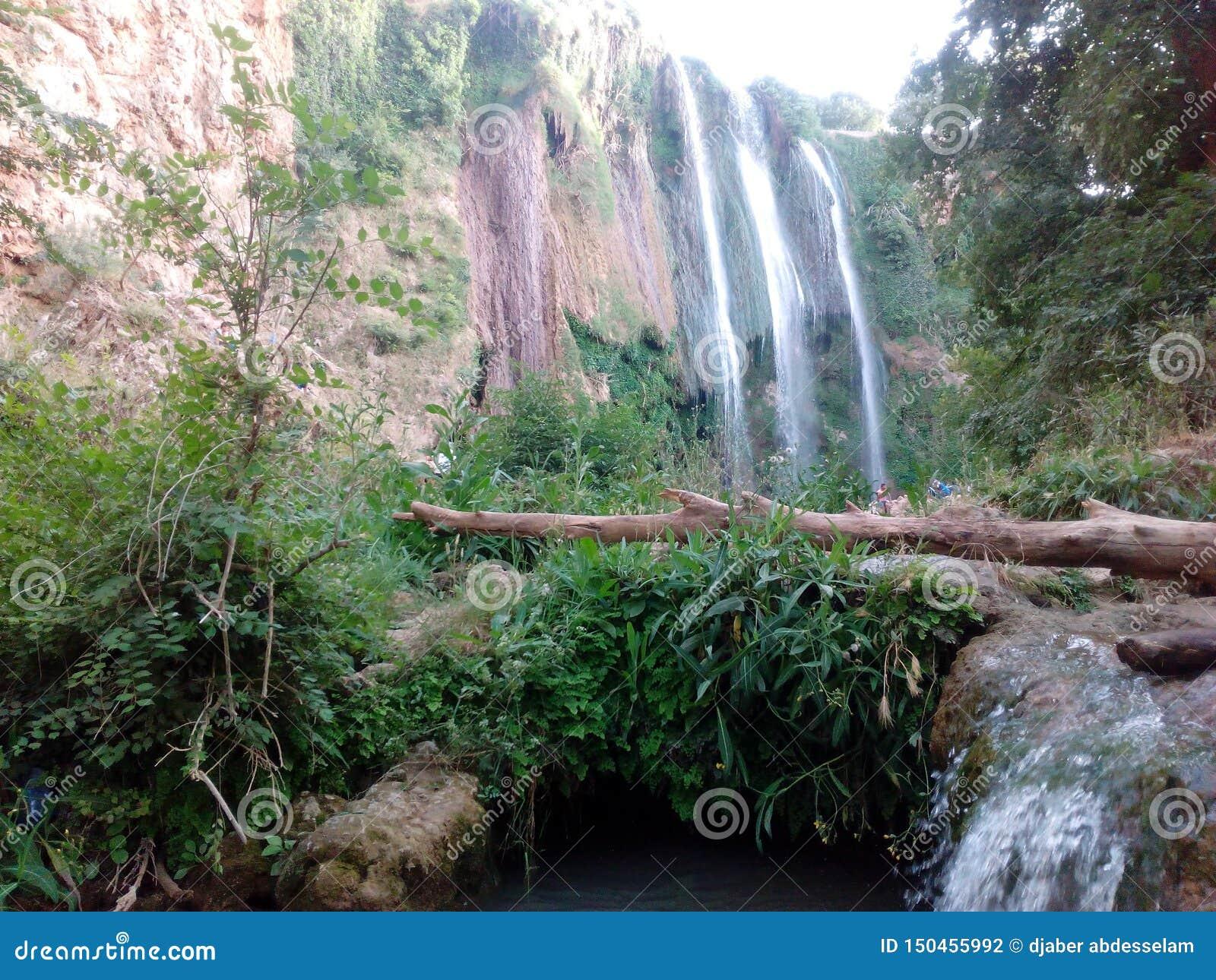Vörda naturen i tiaretstaden Algeriet