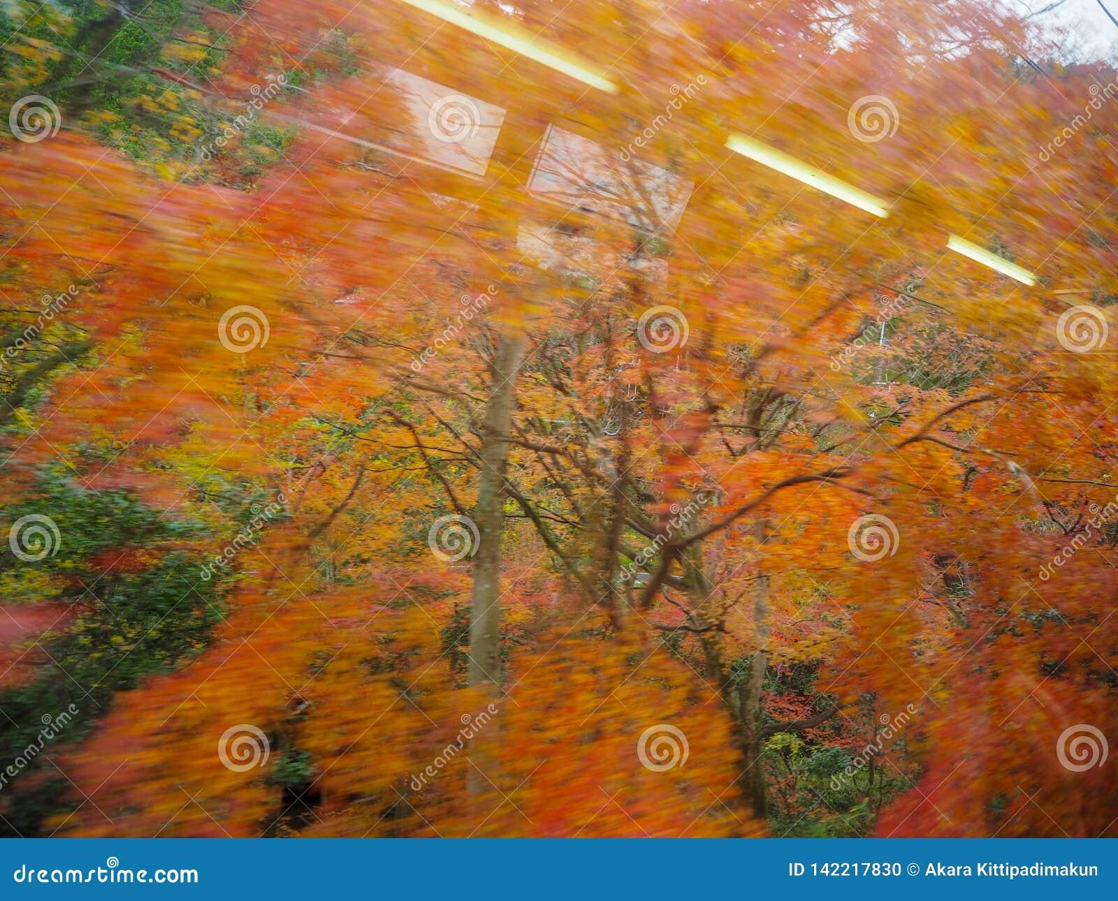 Vaag van kleurrijke esdoornbomen
