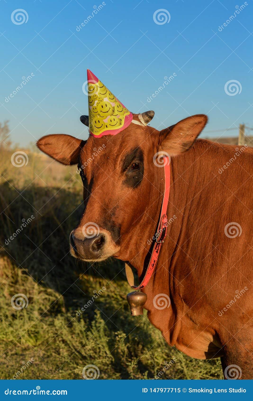 Vaca con el sombrero birtday
