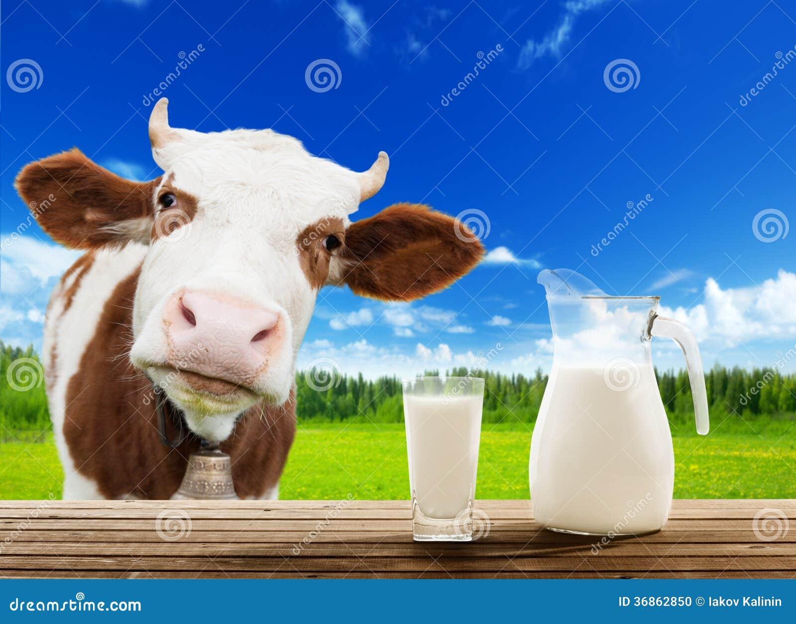 Vaca e leite