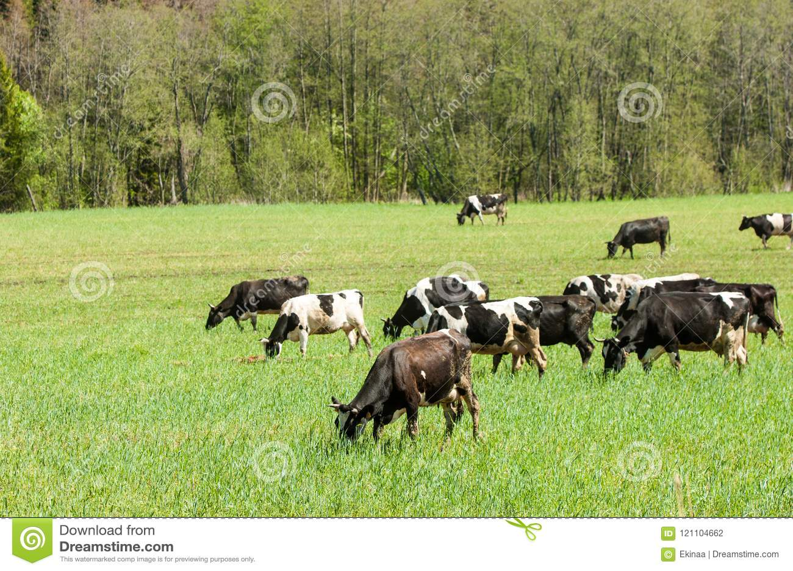 Vaca kine beefs carne bossy necklace