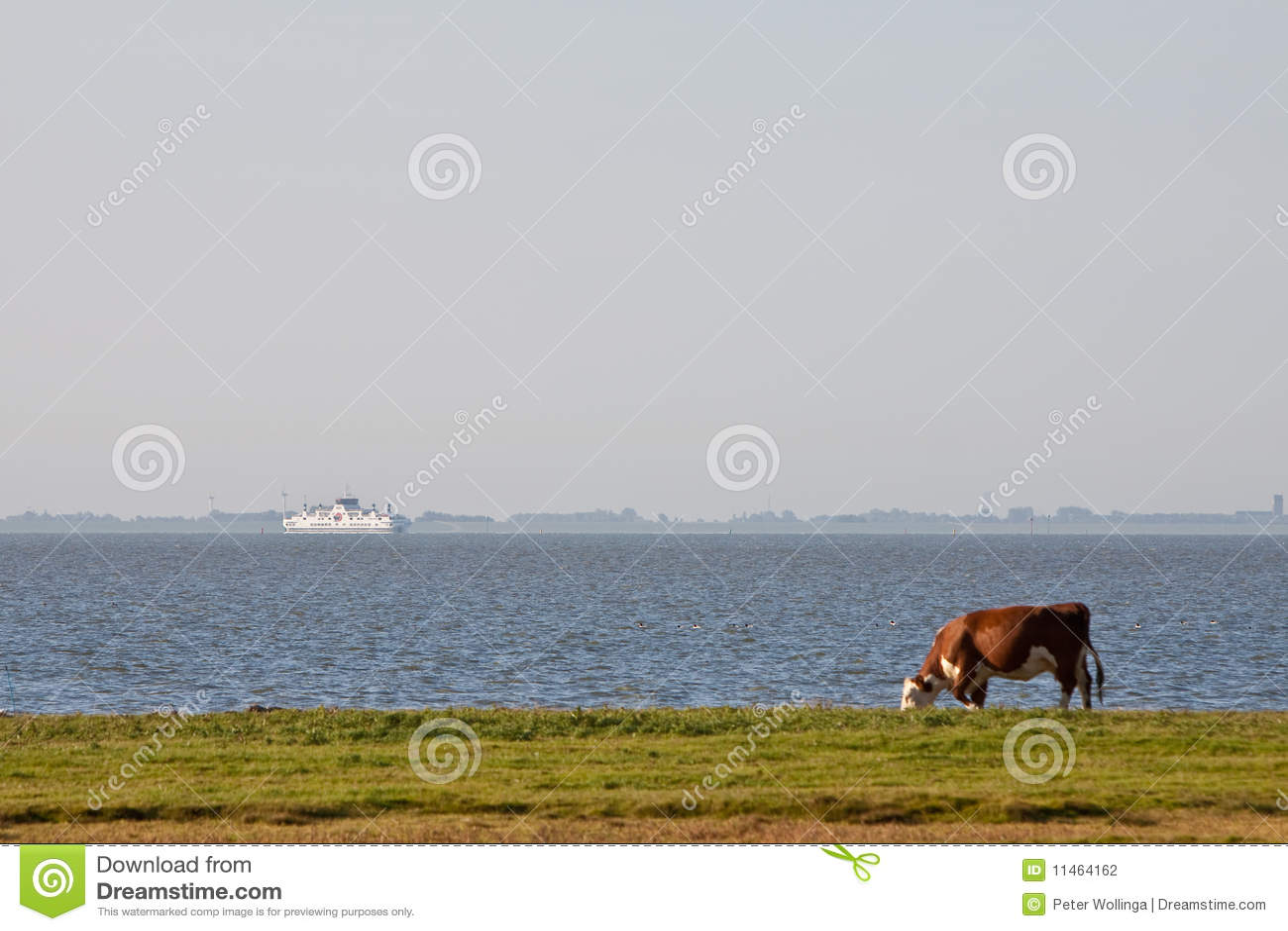 Vaca que pasta en tierras de labrantío cerca del agua