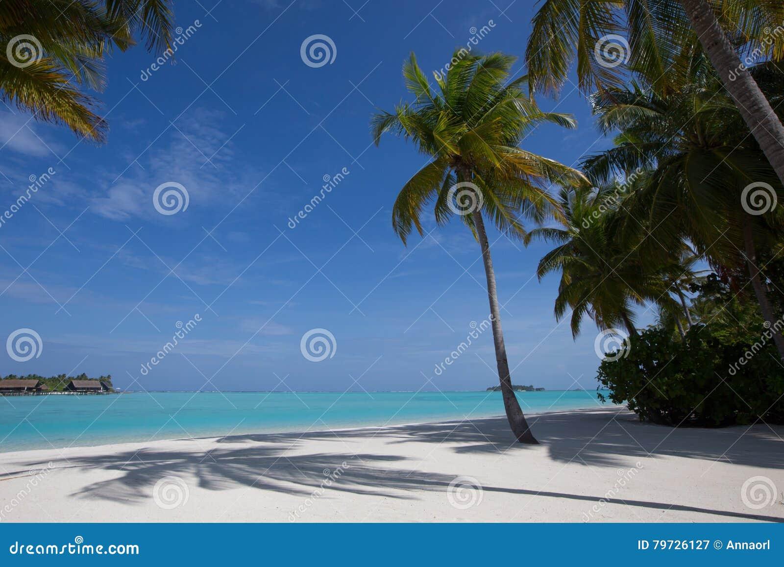 Vacaciones tropicales del paraíso - palmeras, arena y océano