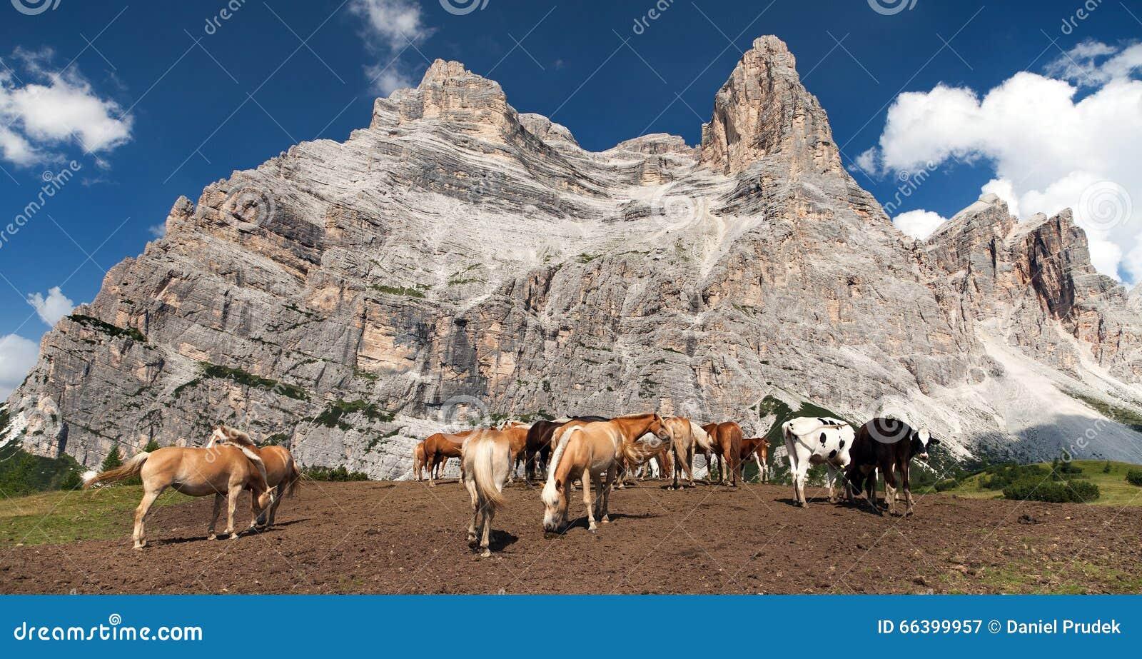 Vacas e cavalos sob Monte Pelmo no italiano Dolomities