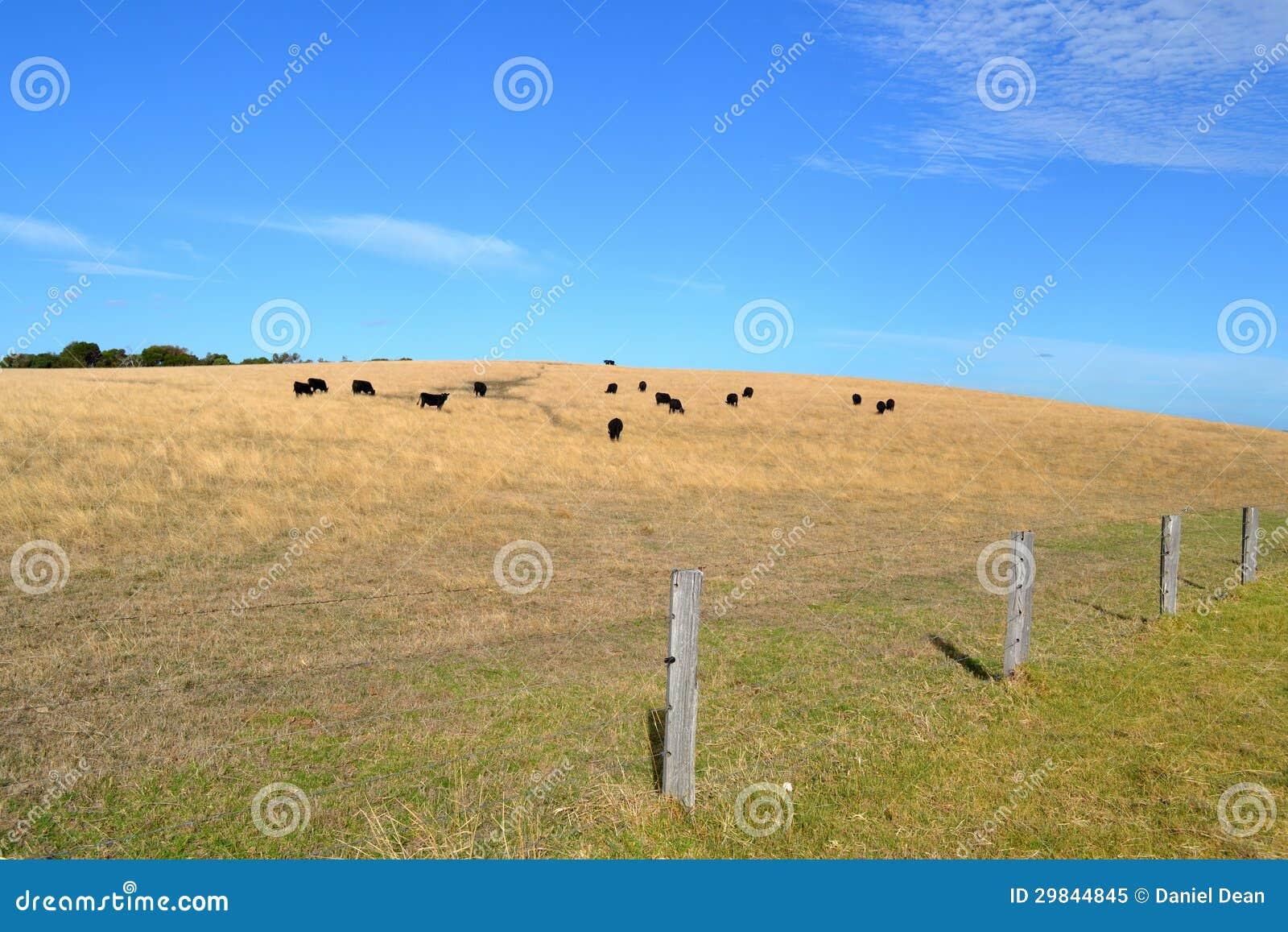 Monte da vaca
