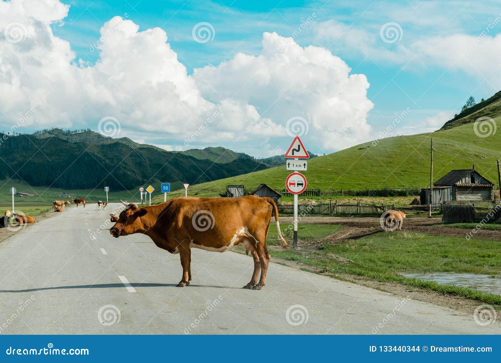 Vacas en el camino en un día soleado