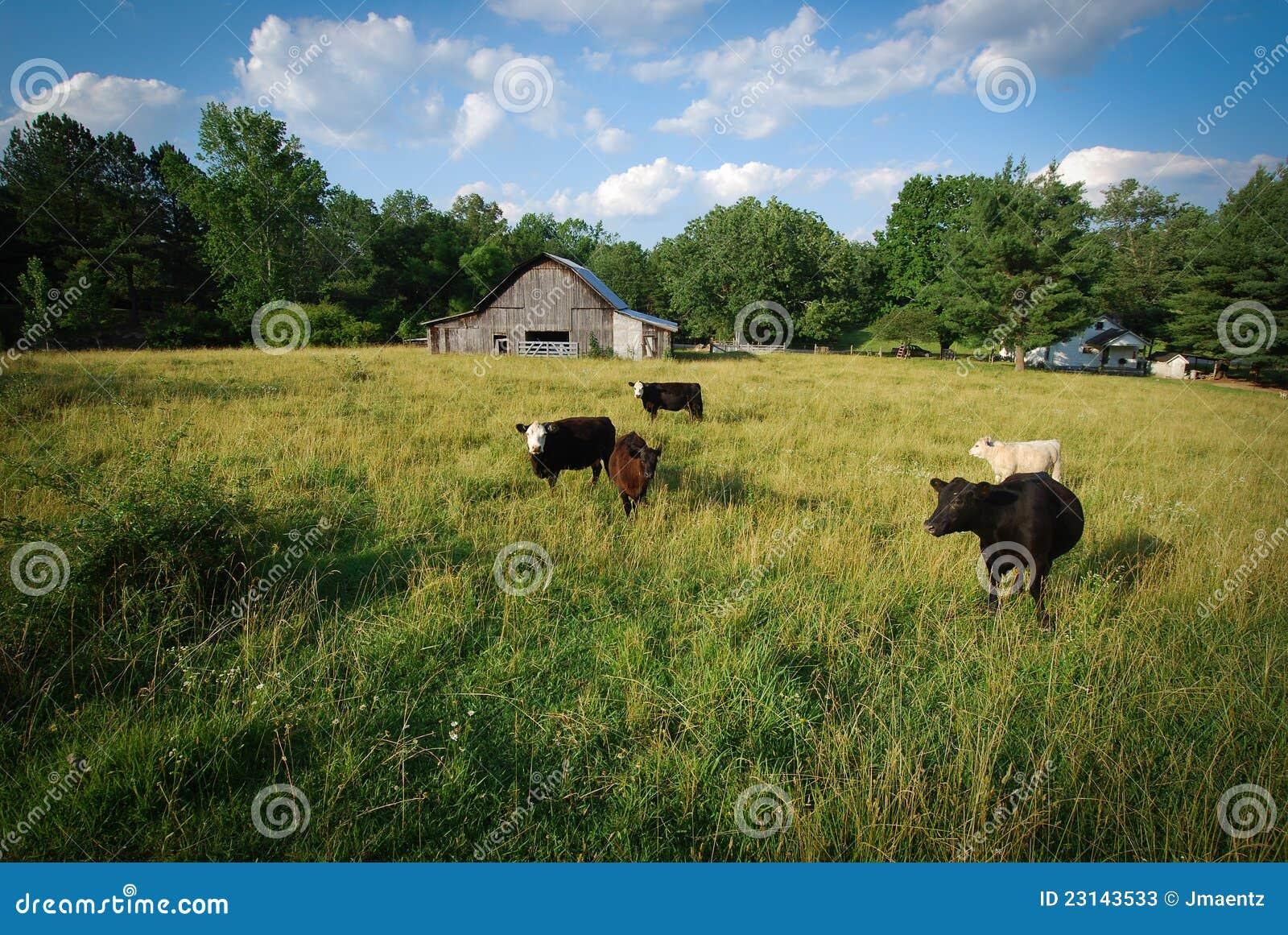 Vacas en un campo
