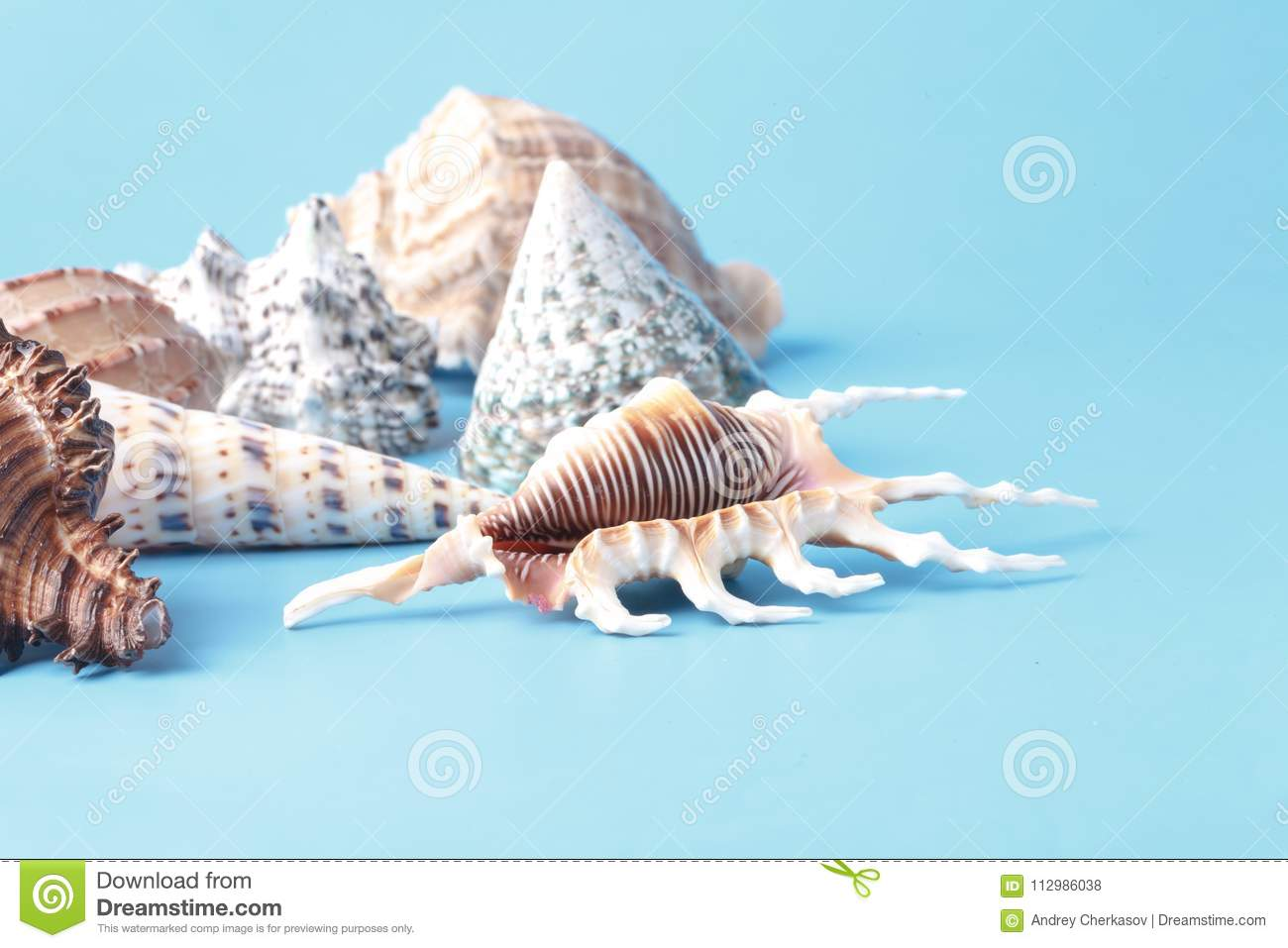 Vacation background with sea shell on blue