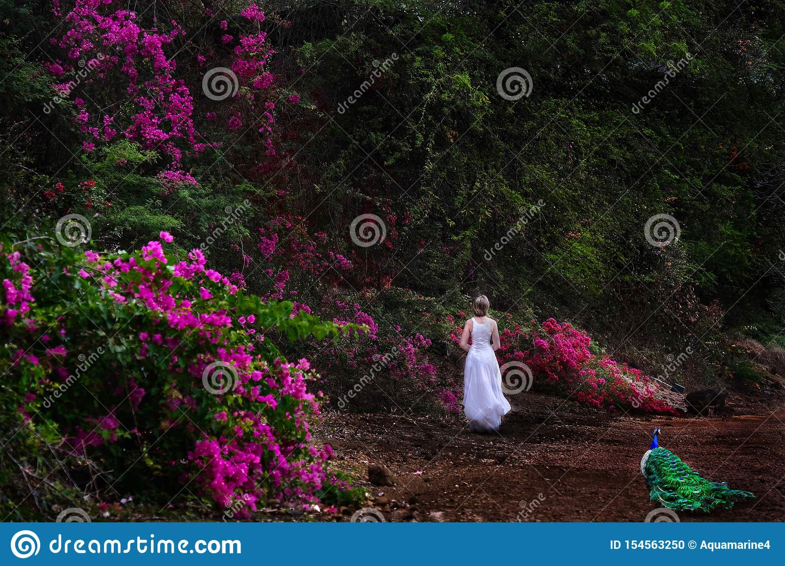 Vacation on Hawaii. Woman walking in botanical garden with pink flowers and a peacock.