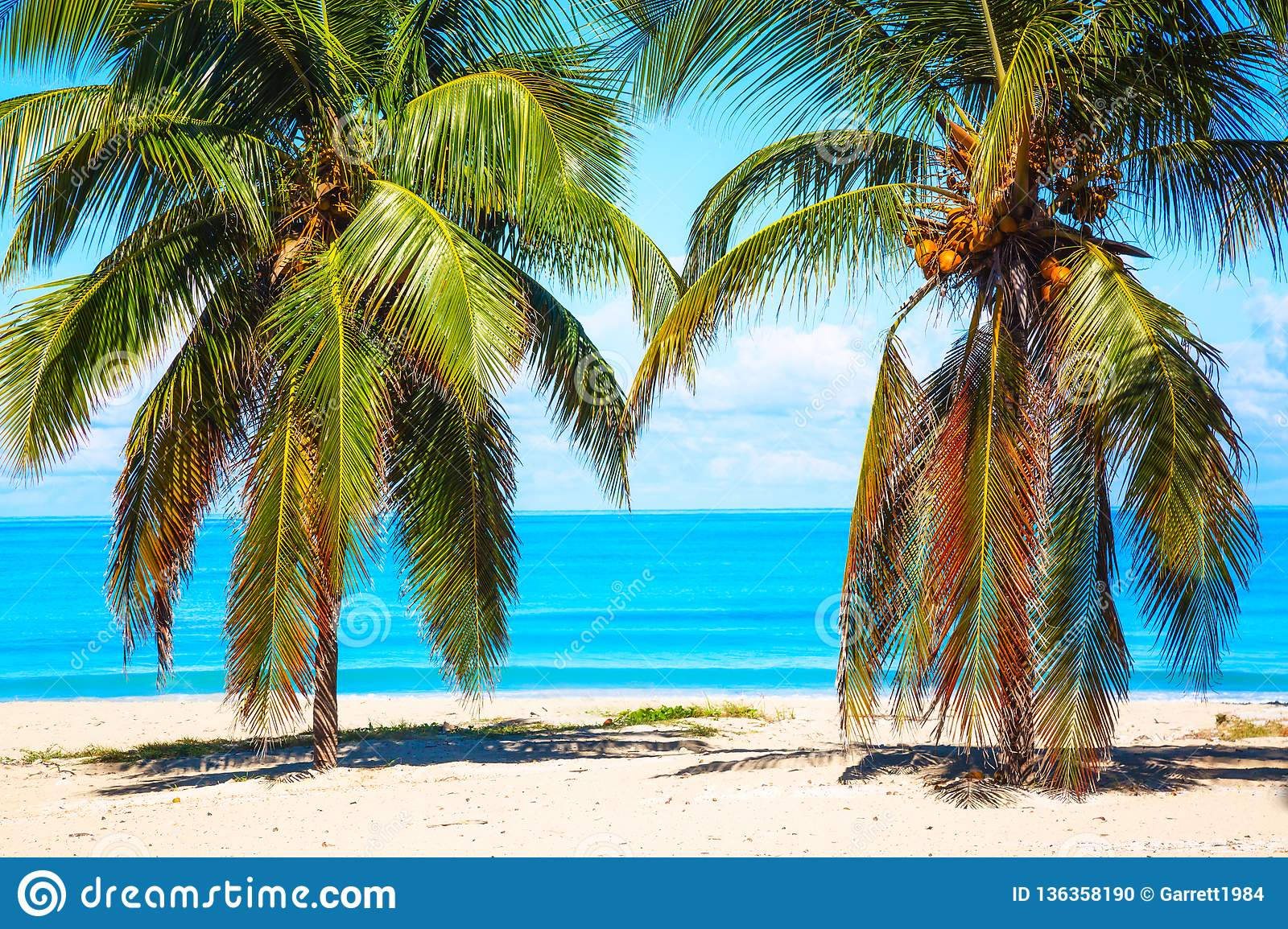 Vacation Holidays Background Wallpaper Palm Trees And Tropical