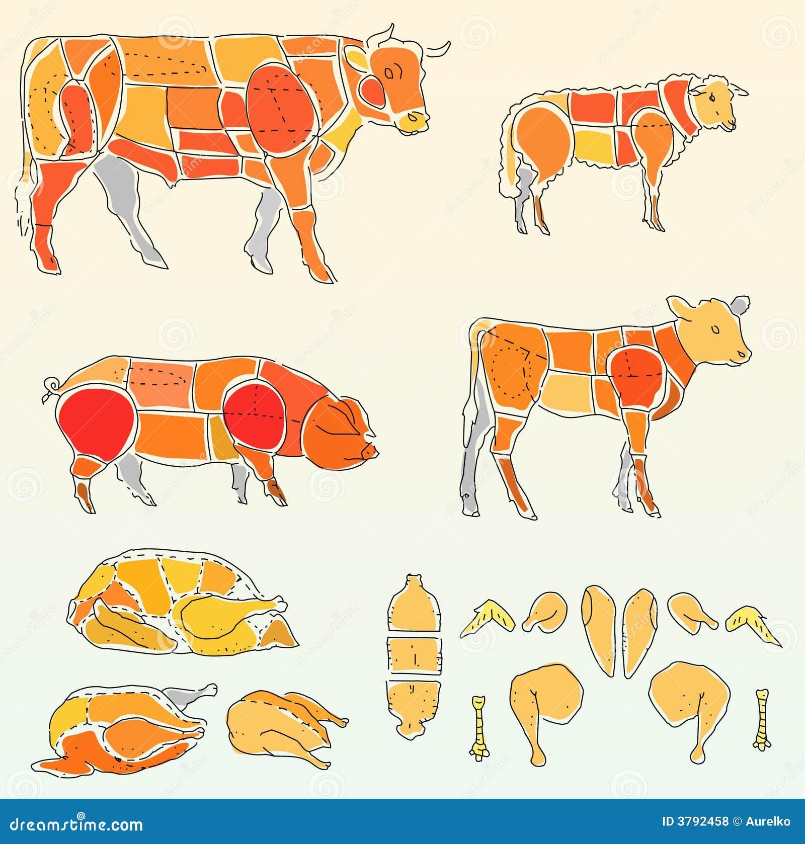 Vache et poulet