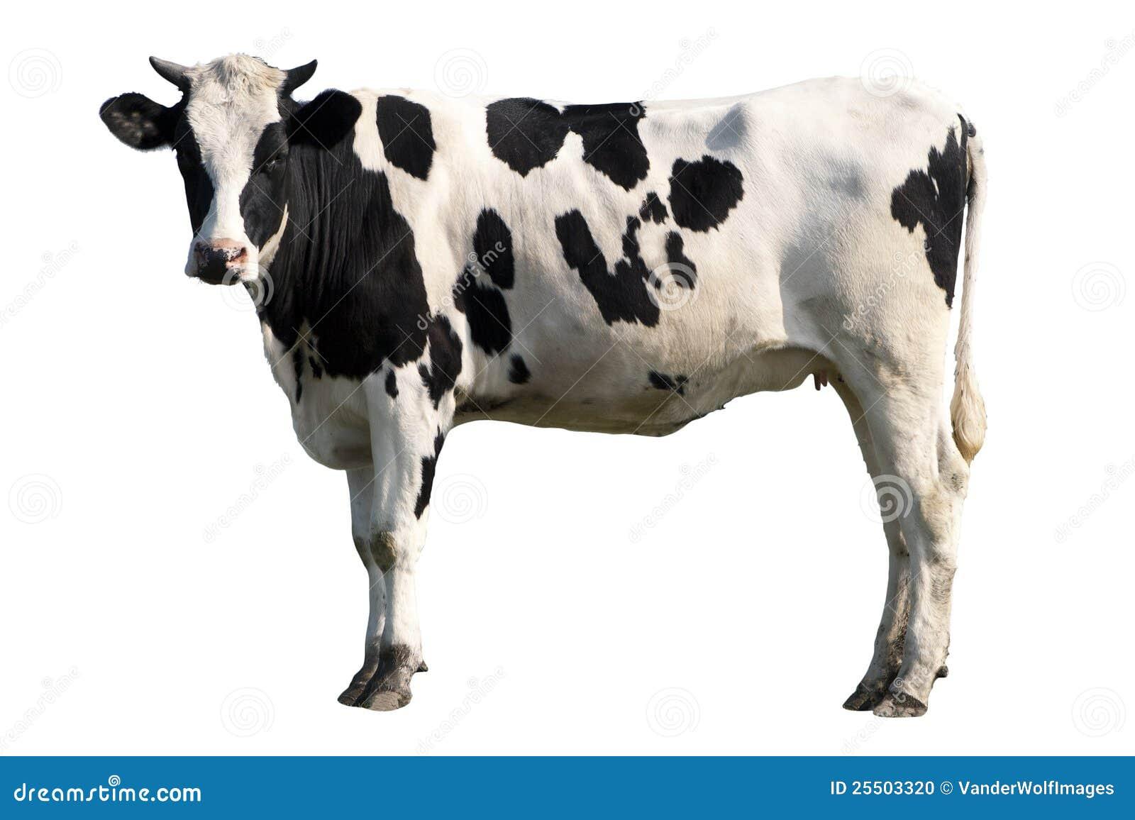 vache noire et blanche photo stock image du d coupage 25503320. Black Bedroom Furniture Sets. Home Design Ideas