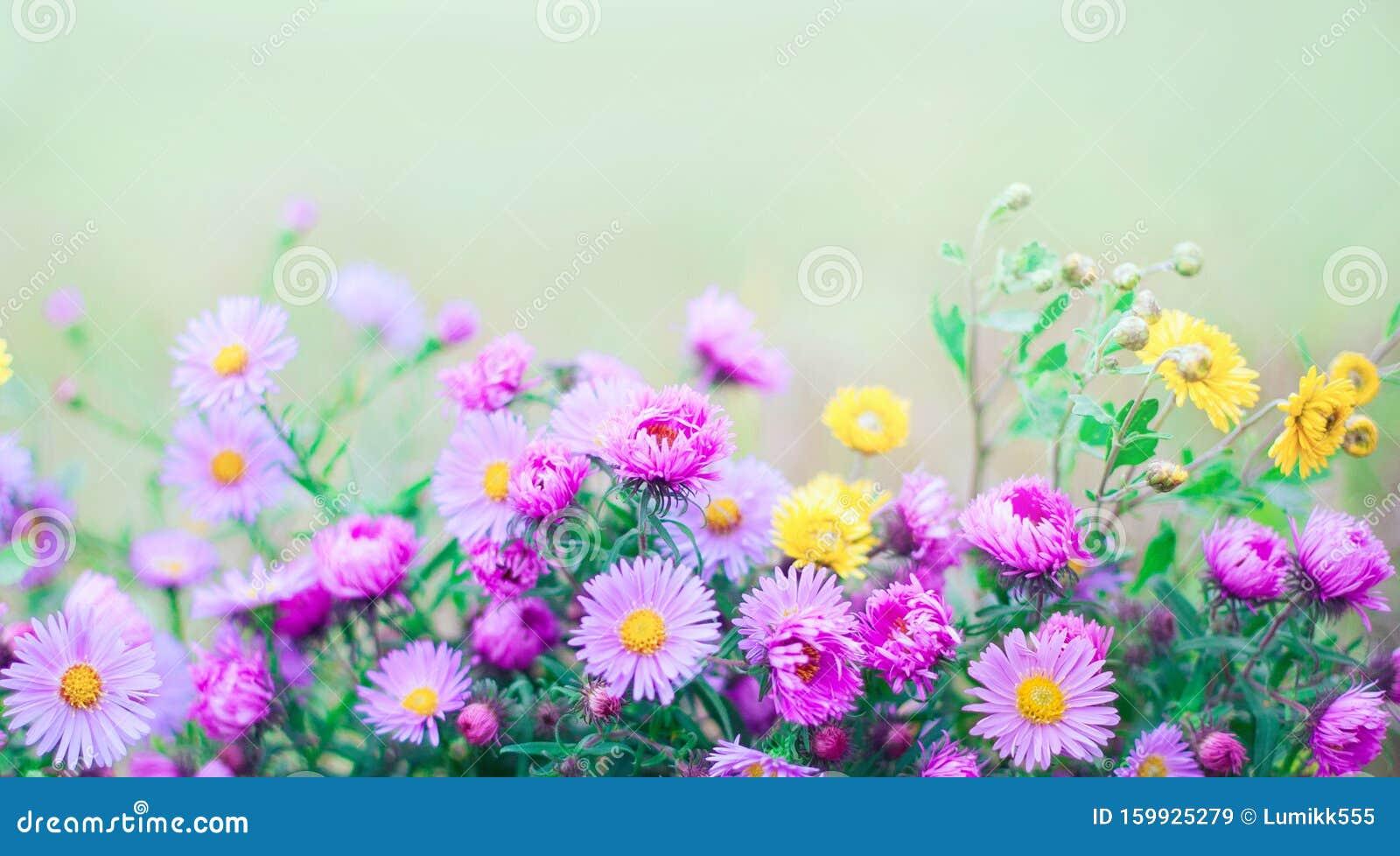 blommor i naturen