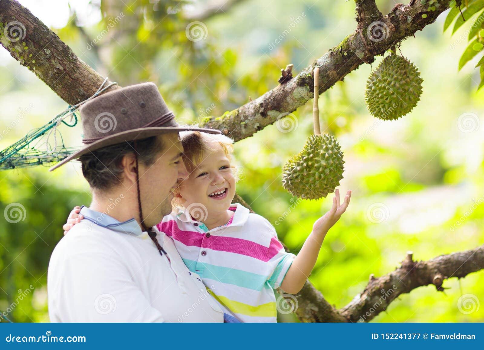 Vader en kind plukken durian van boom