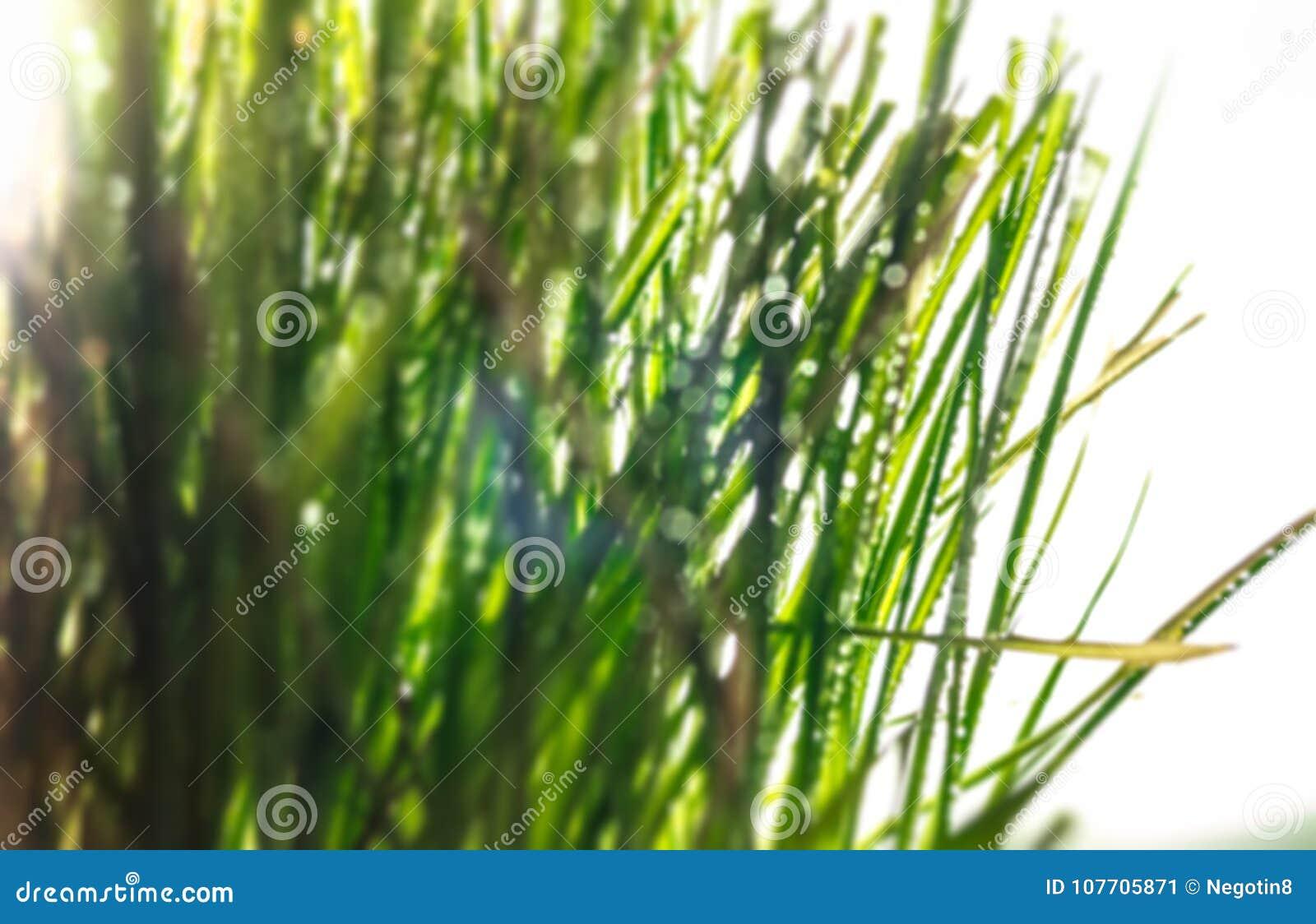 Vage grasachtergrond
