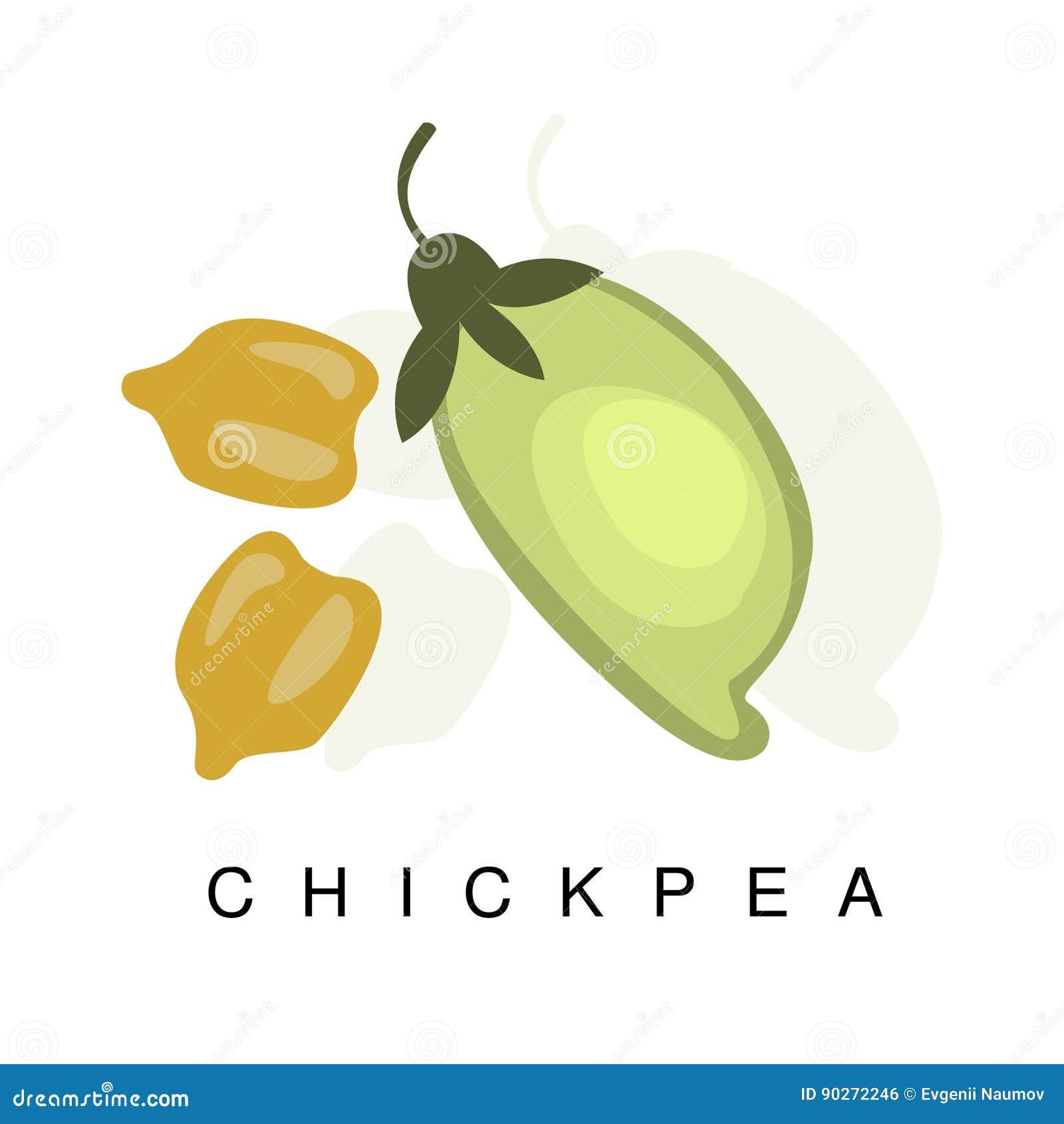 Vagem do grão-de-bico, ilustração de Infographic com a planta realística das leguminosa do Vagem-rolamento e seu nome