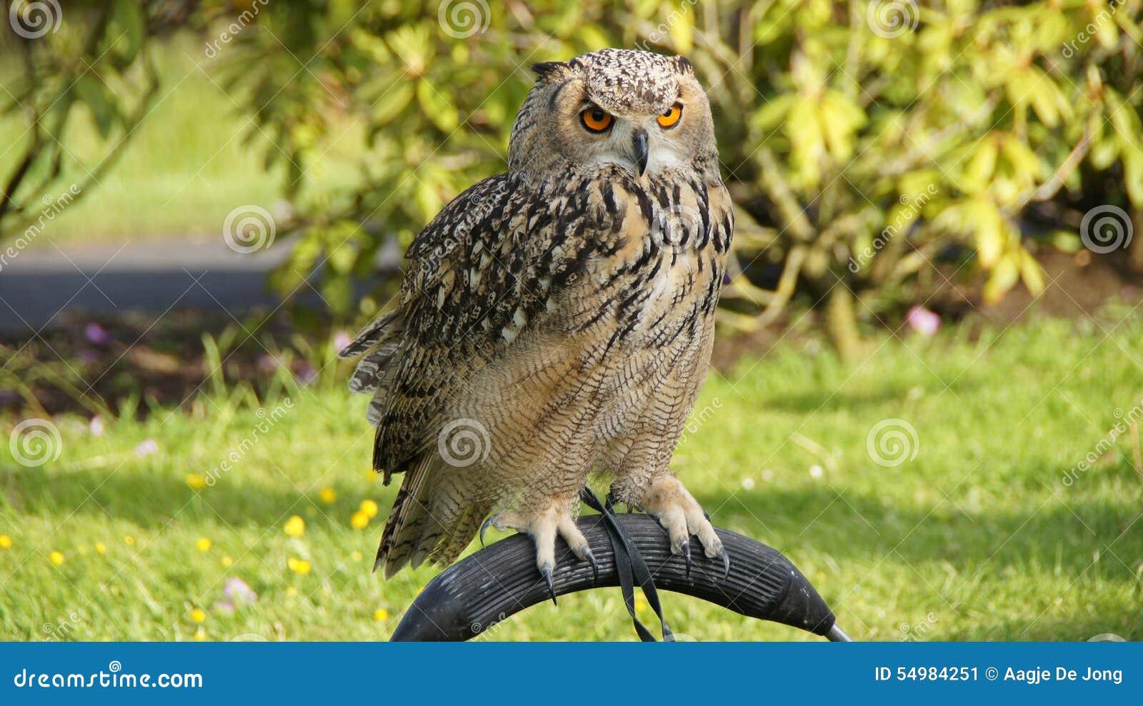 Vagga Eagle Owl