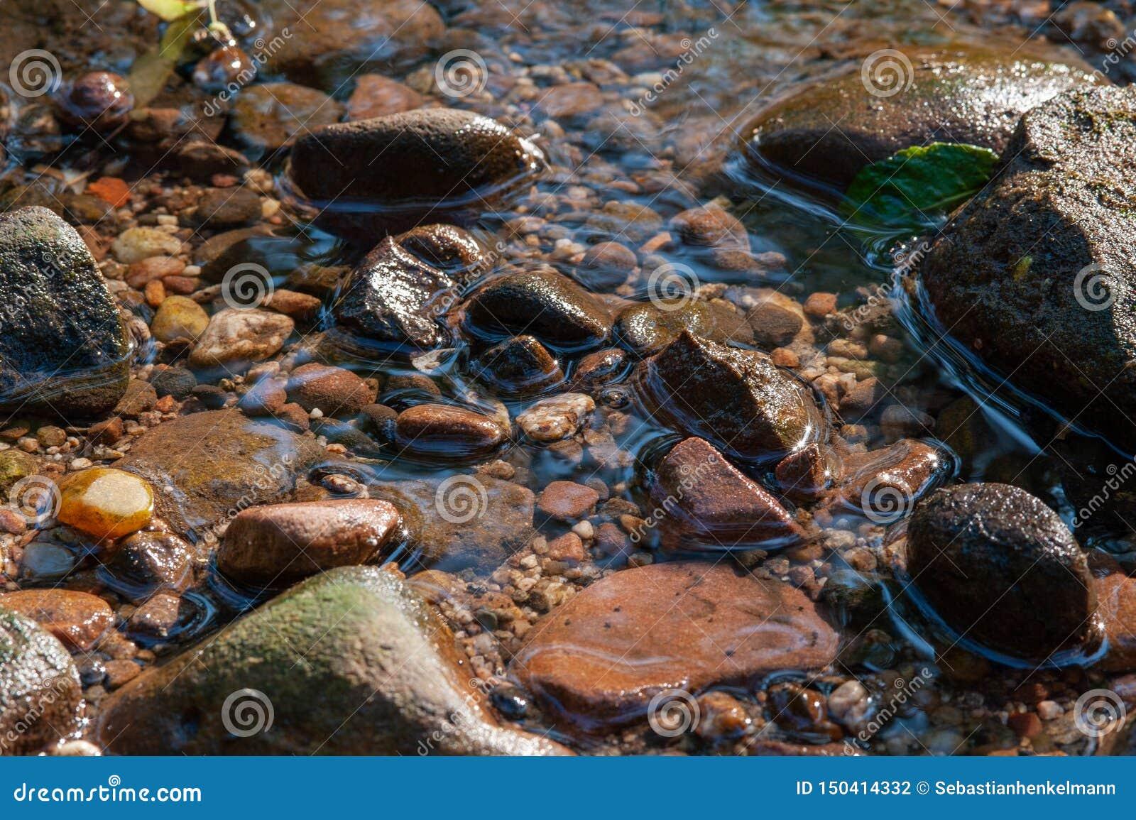 Vaggar i grunt vatten