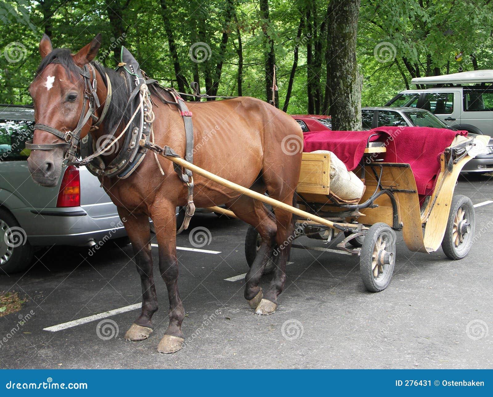 Vagnshäst