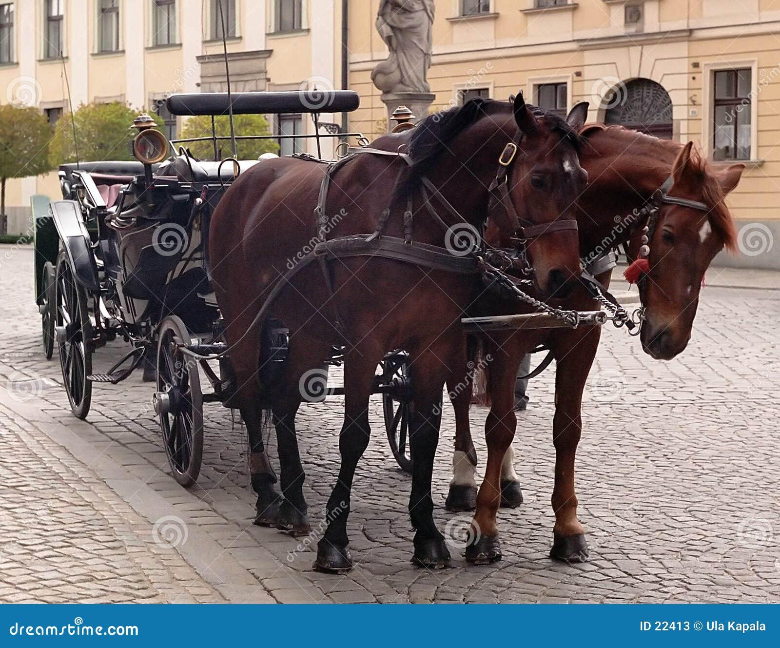 Vagnshästhästar