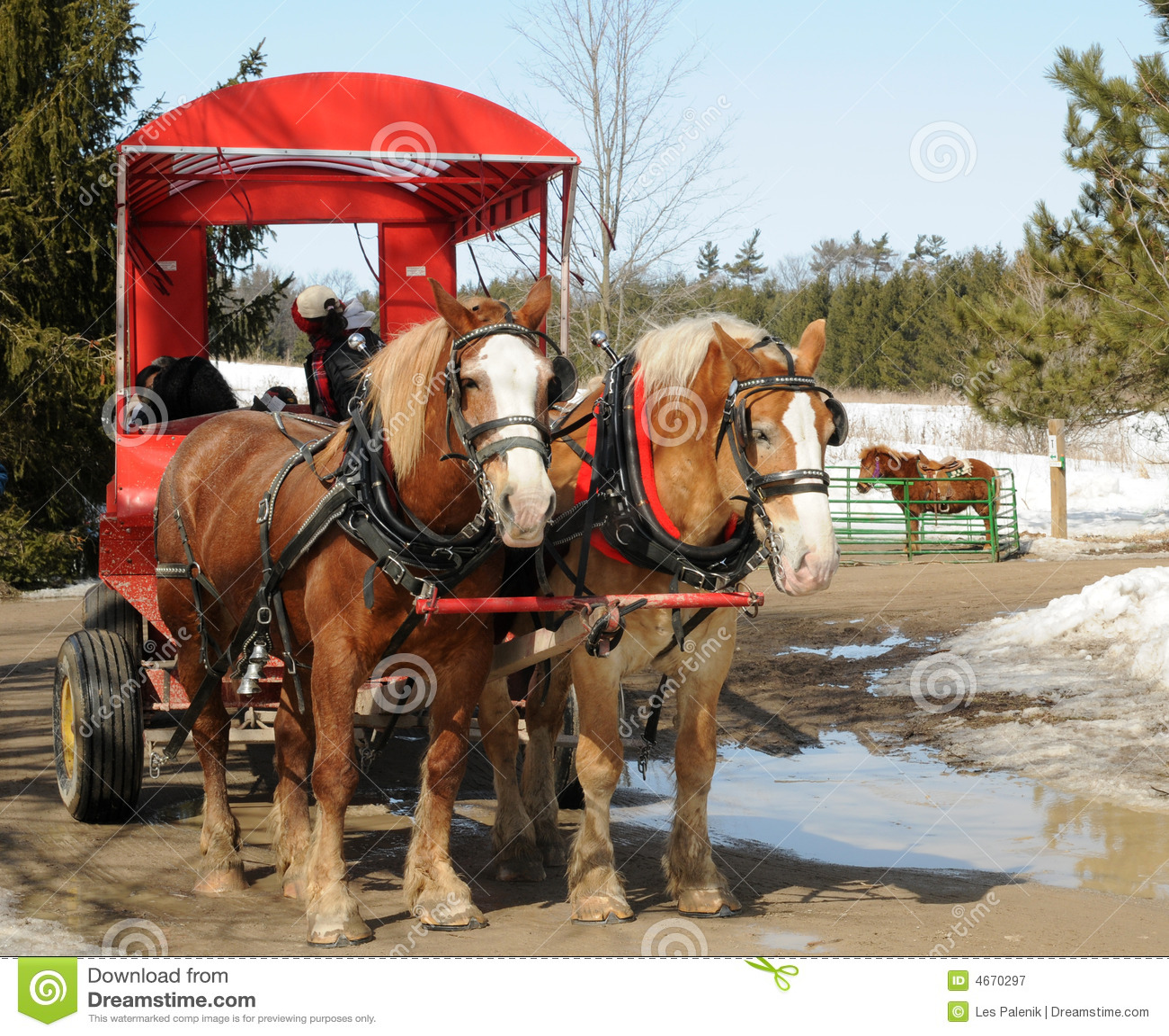 Vagone del cavallo