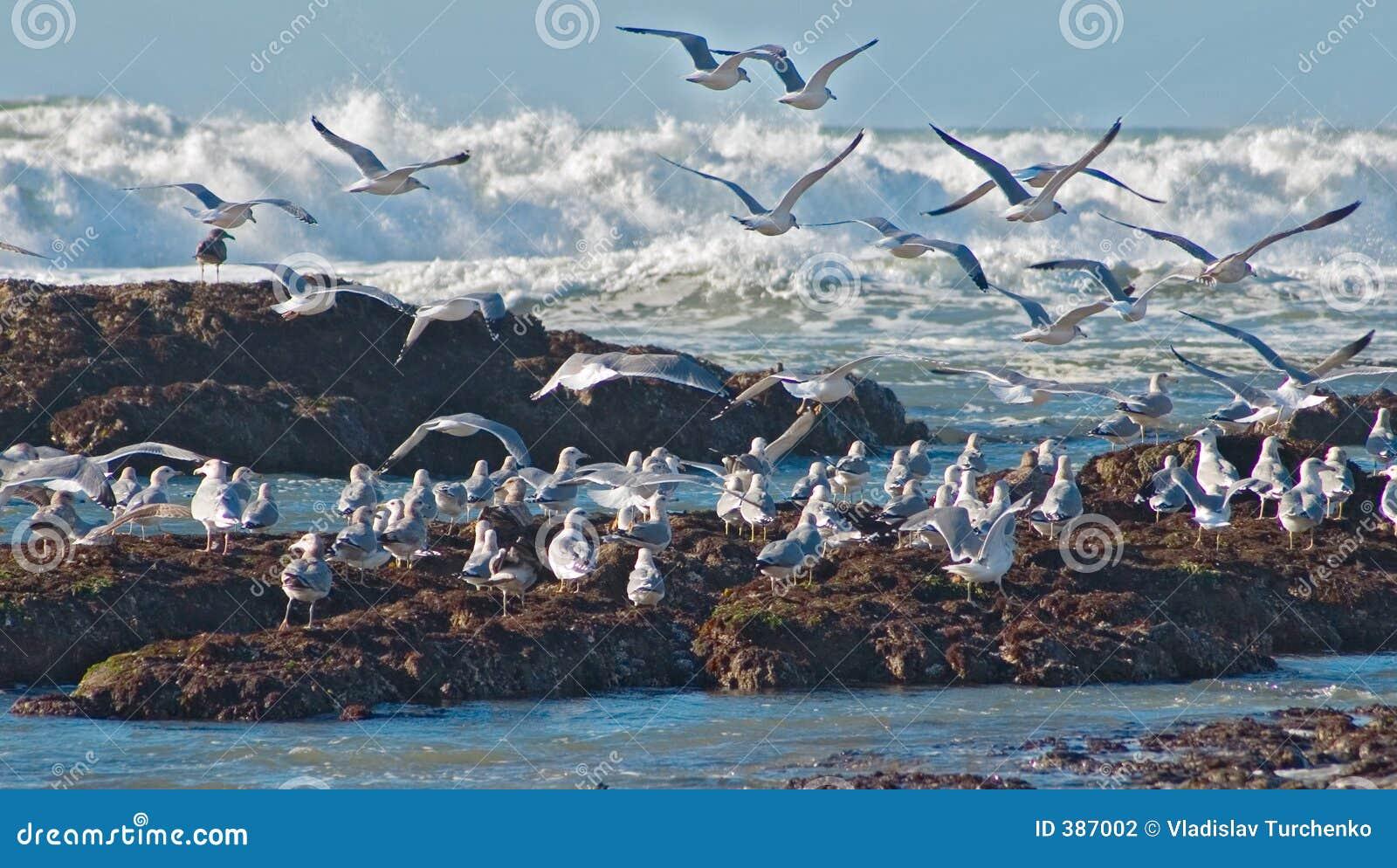 Vague déferlante et mouettes d océan
