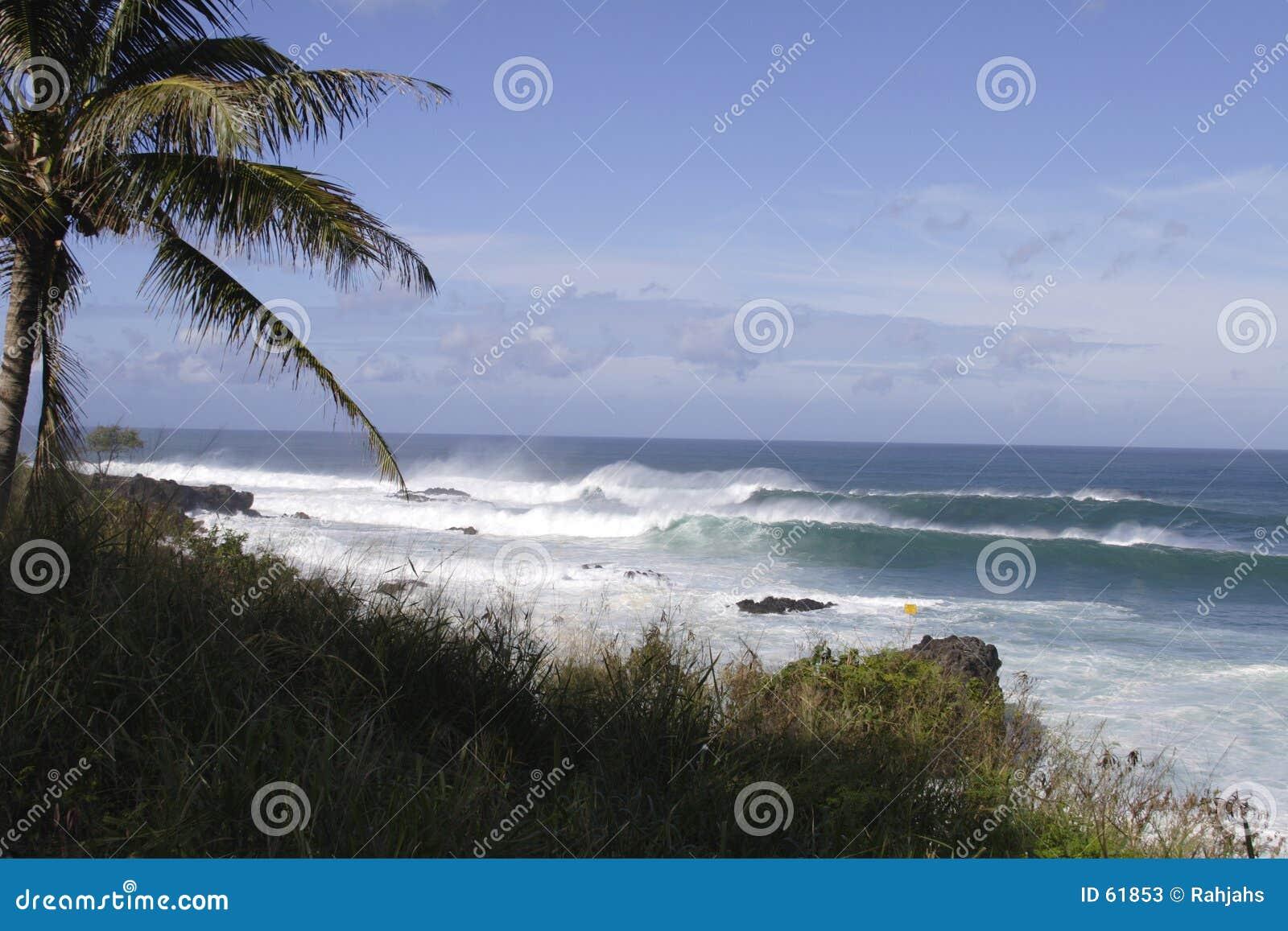 Download Vague Déferlante, Paysage Marin De Northshore Image stock - Image du ondes, paume: 61853