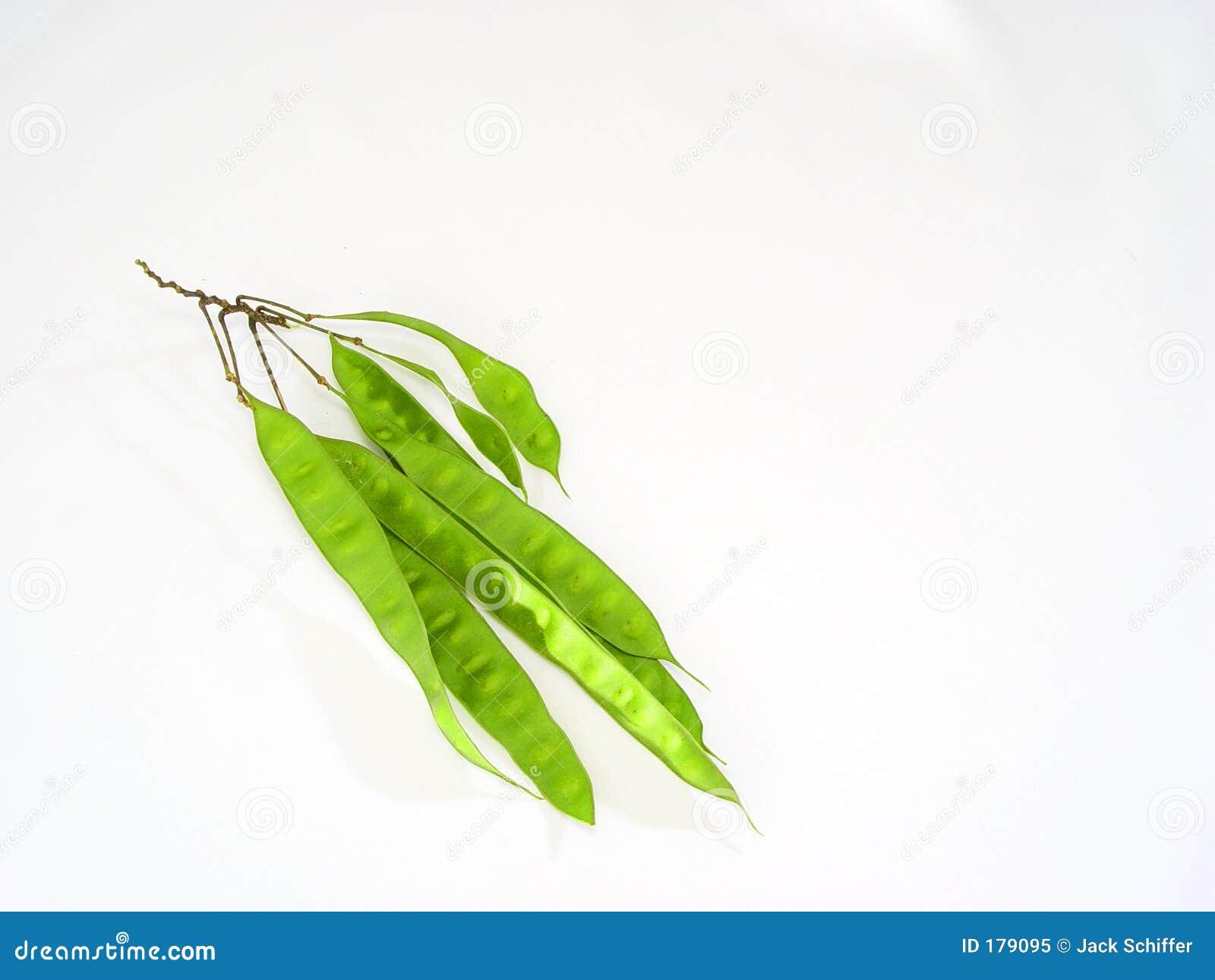 Vainas de planta