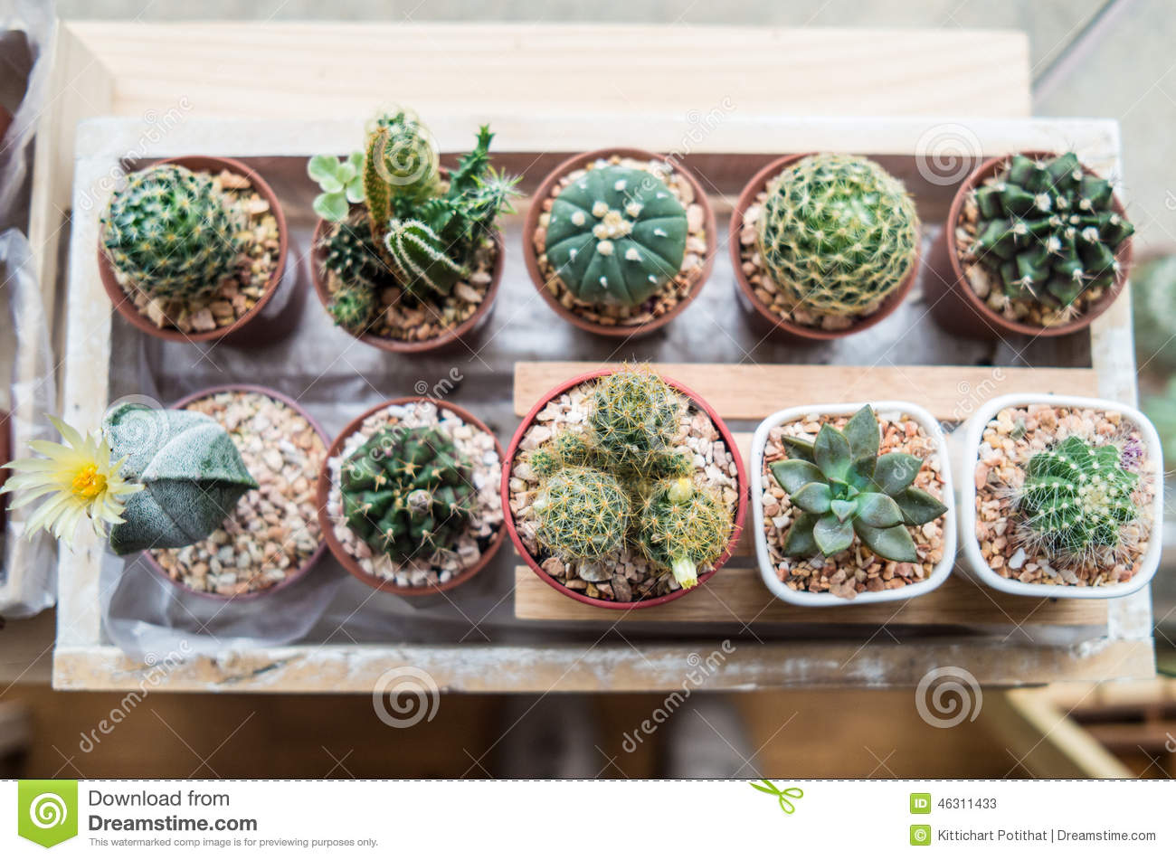 Vaious types of cactus stock photo image 46311433 - Indoor plant varieties ...