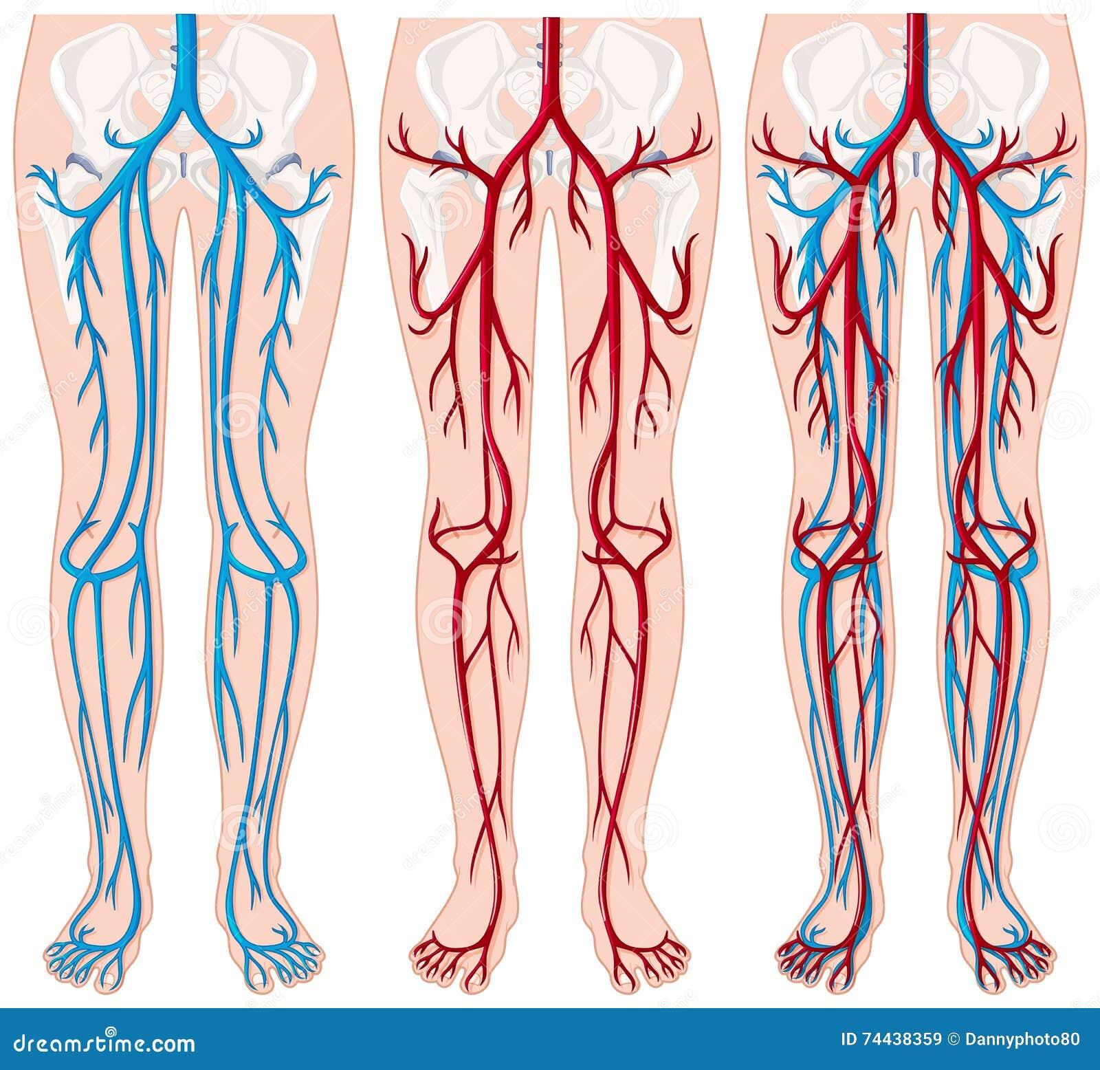 maladie vaisseaux sanguins