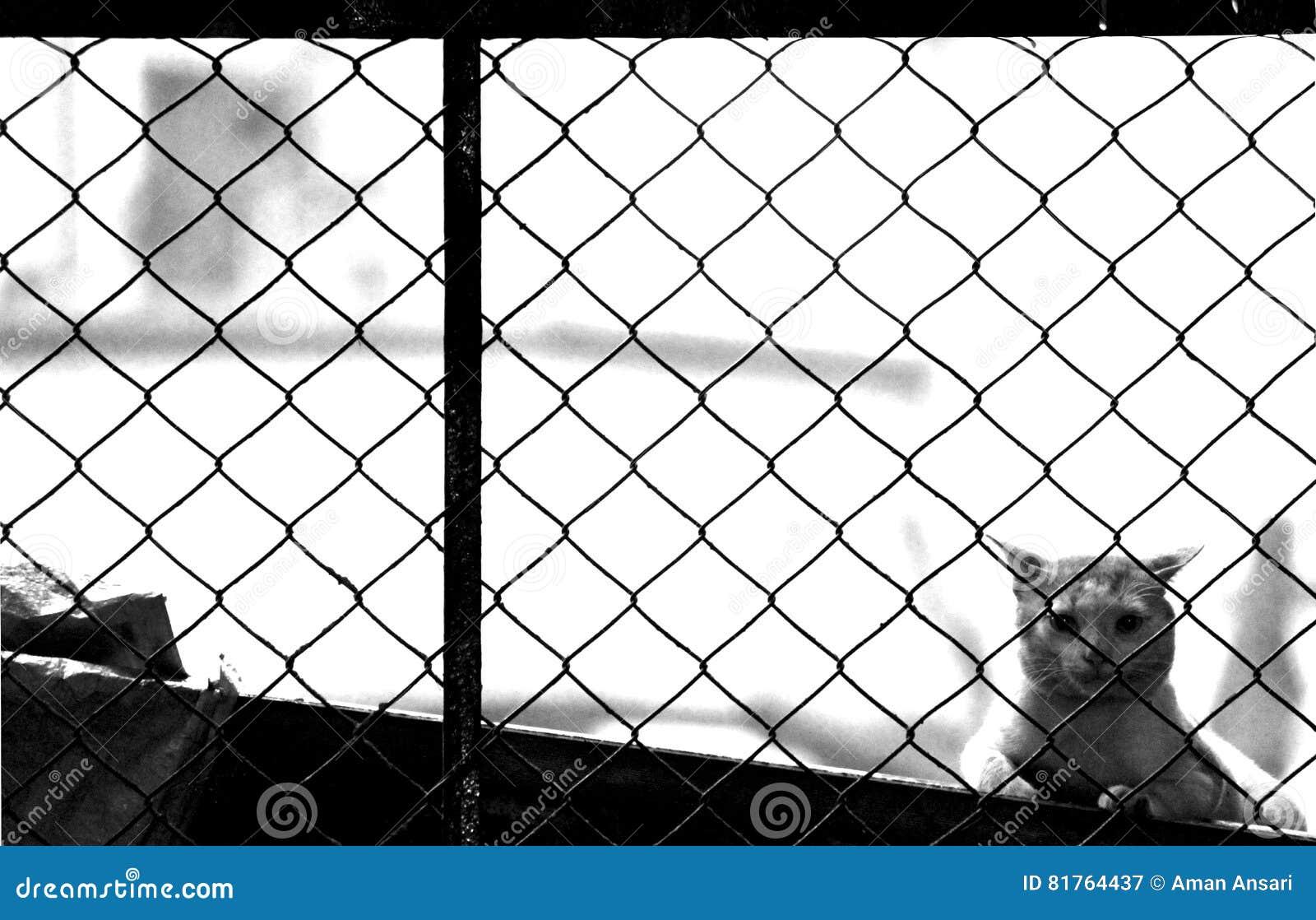 Vaksamhet över staketet