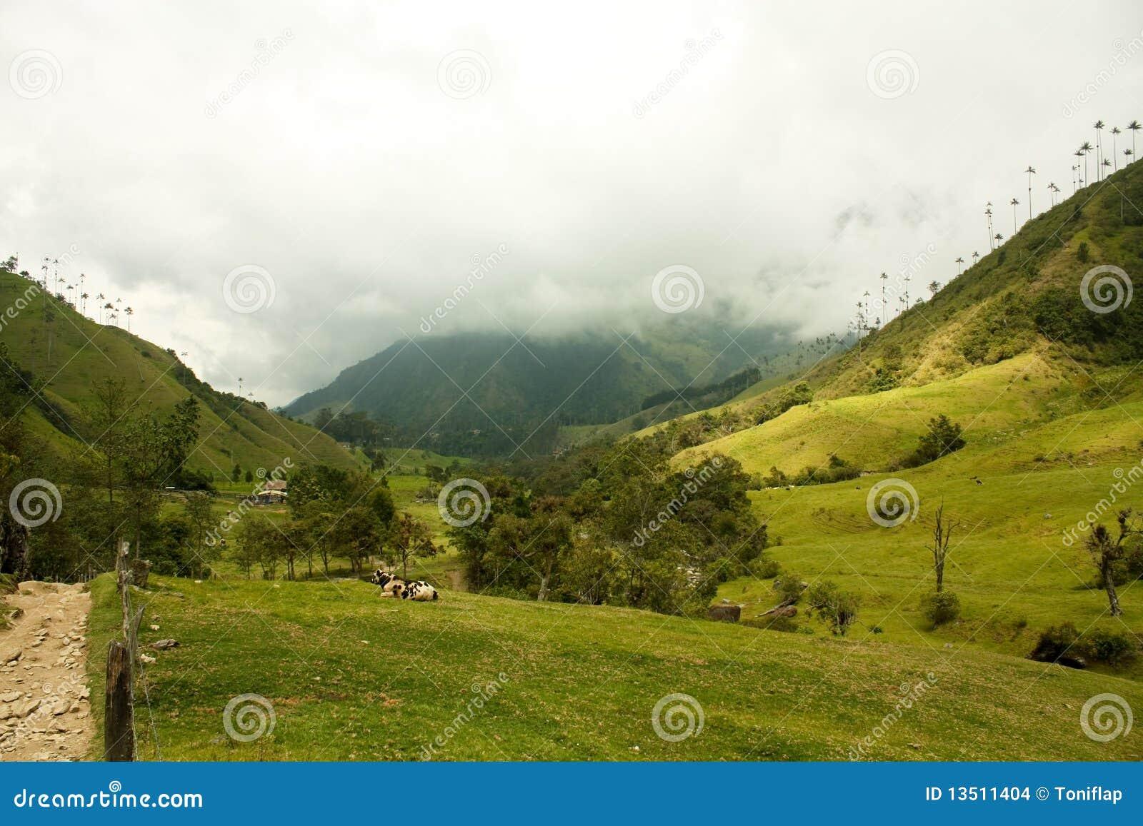 Vale de Cocora, parque natural de Colômbia