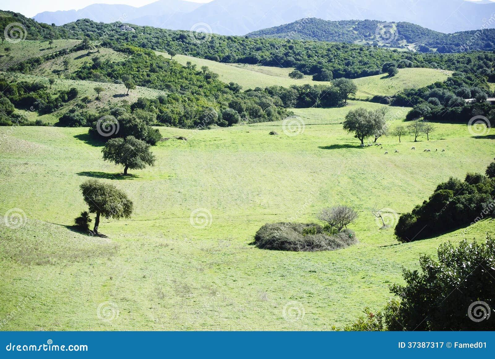 Vale de Sardinia.Green