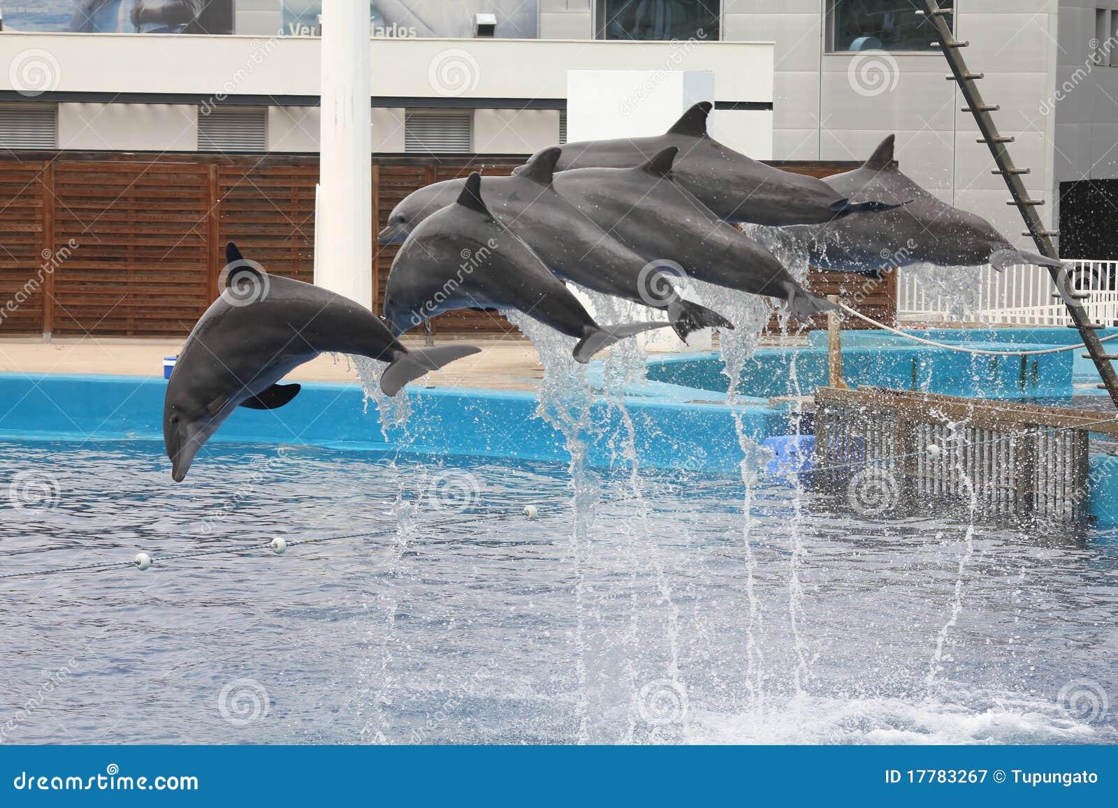 valencia aquarium editorial photography image 17783267