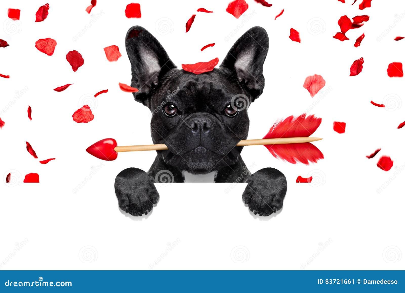Valentijnskaartenhond