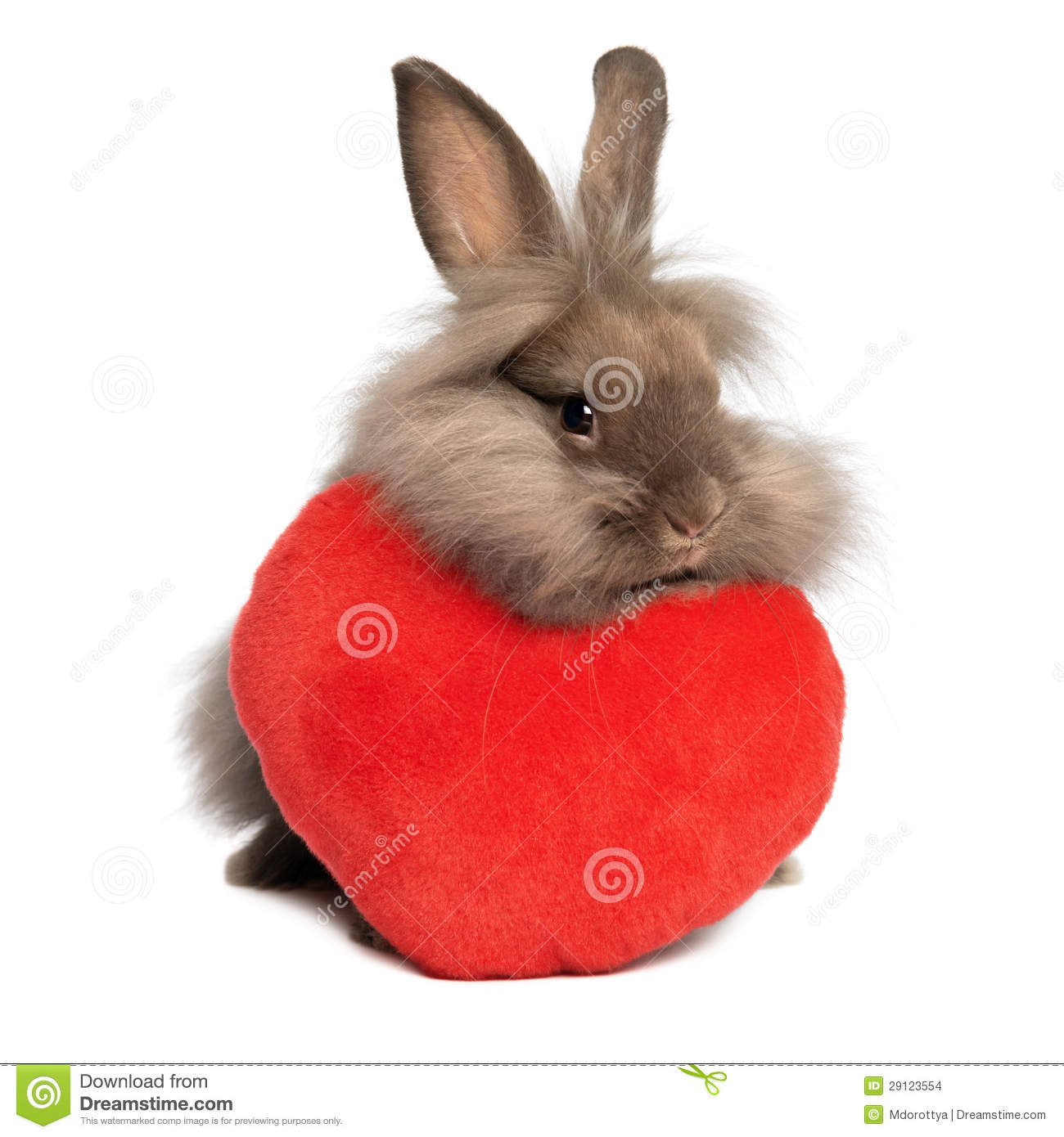 Schön A Valentine Chocolate Lionhead Bunny Rabbit With A Red Heart