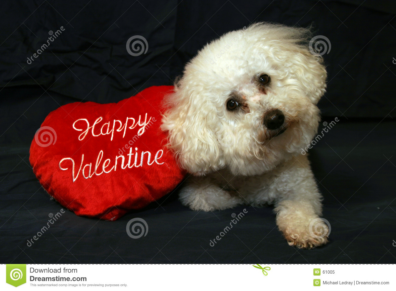Valentine dogs 1 stock image image of portrates mine - Valentines day pictures with puppies ...